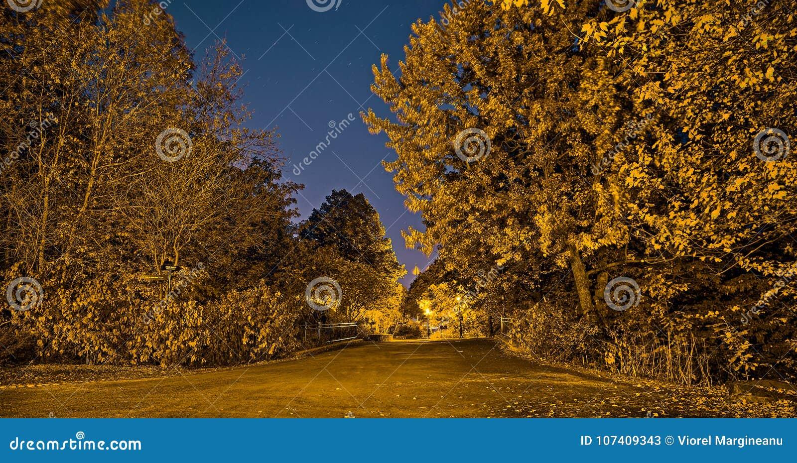 Złoty królewski park w spadek nocy