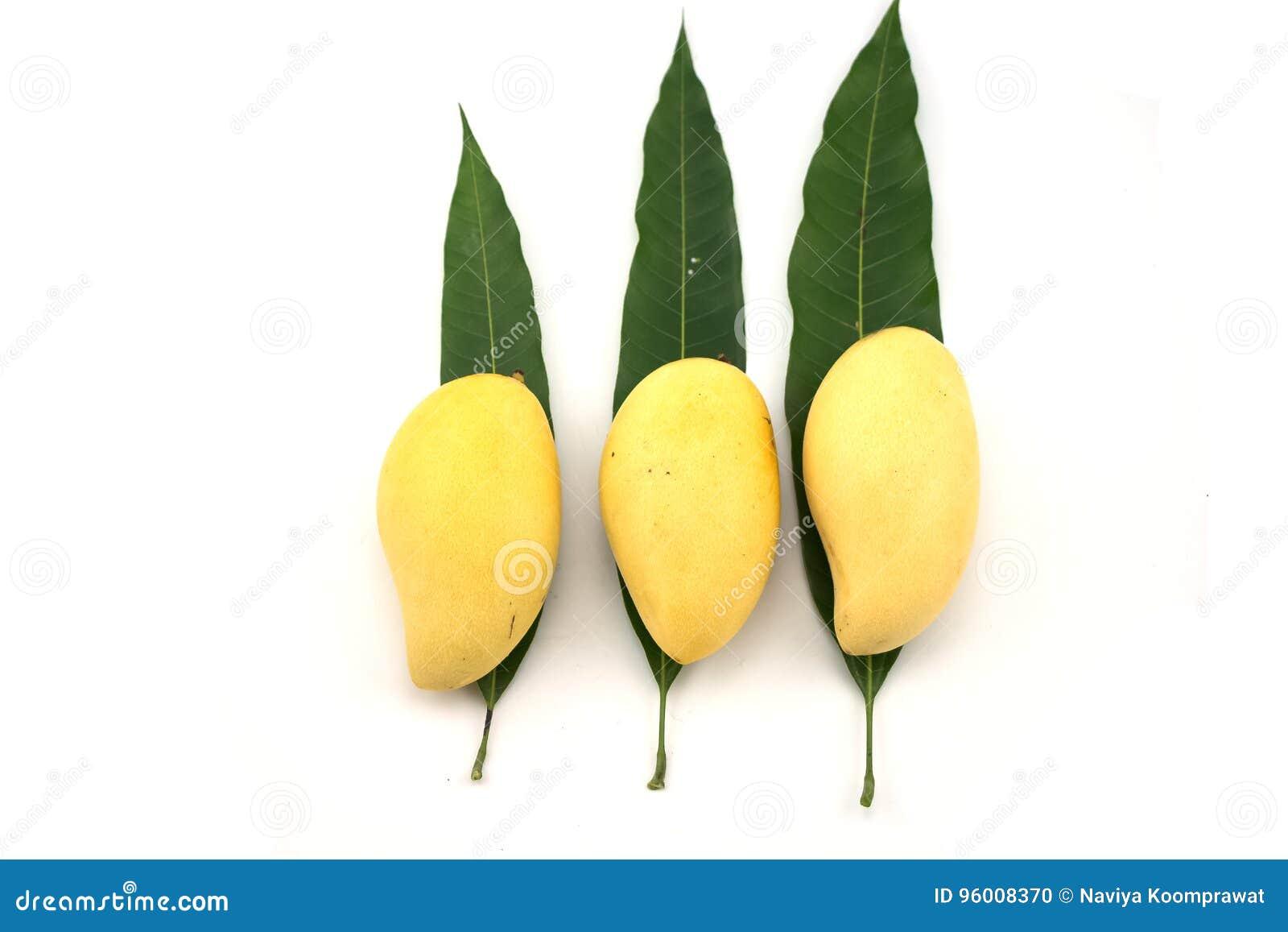 Złoty mango na Mangowych liściach na białym tle