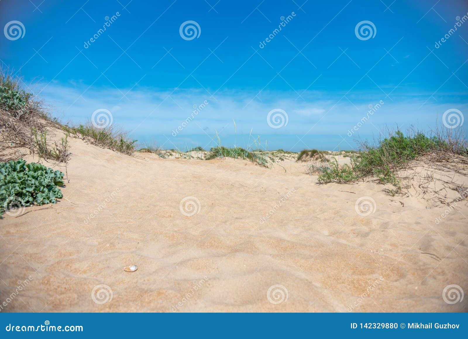 Złoty piasek na niebieskim niebie na gorącym letnim dniu blisko morza i plaży