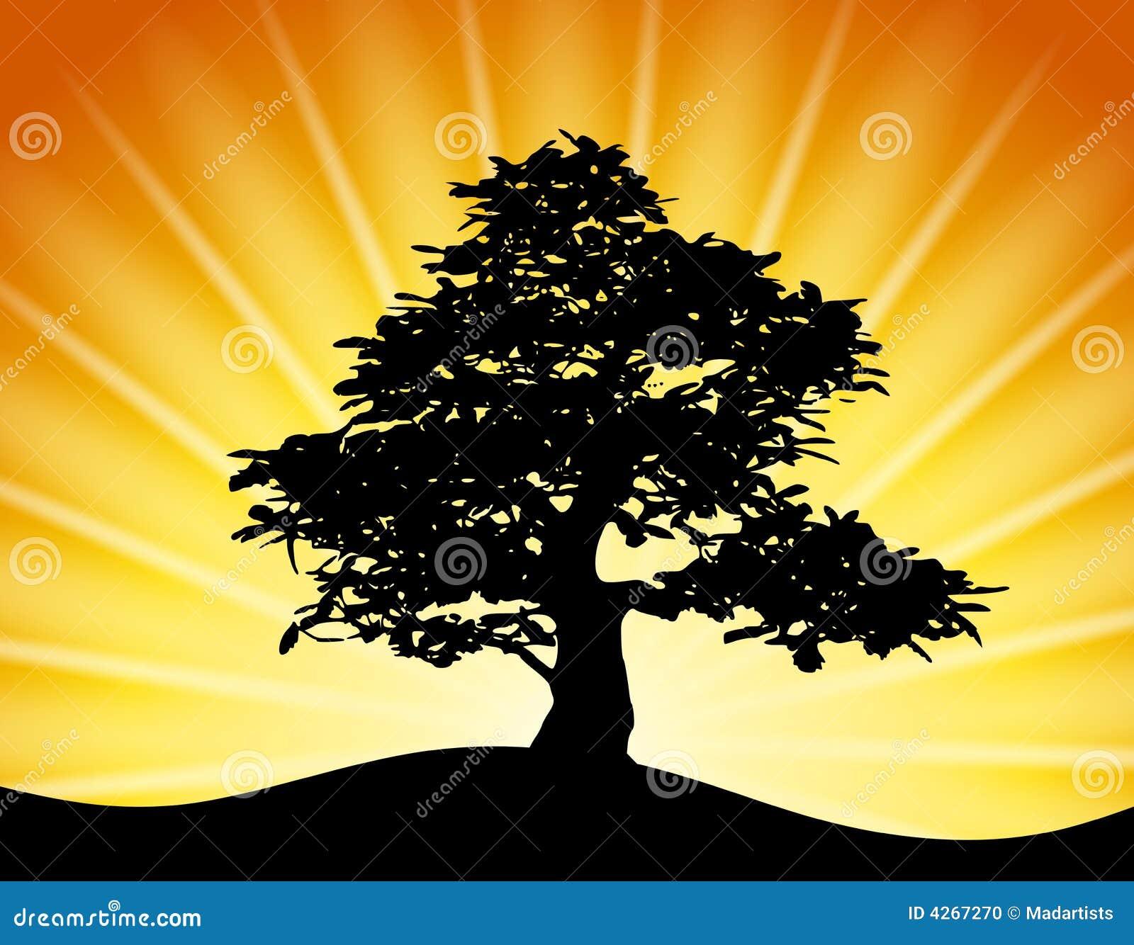 Złoty wiązki sunset sylwetki drzewo