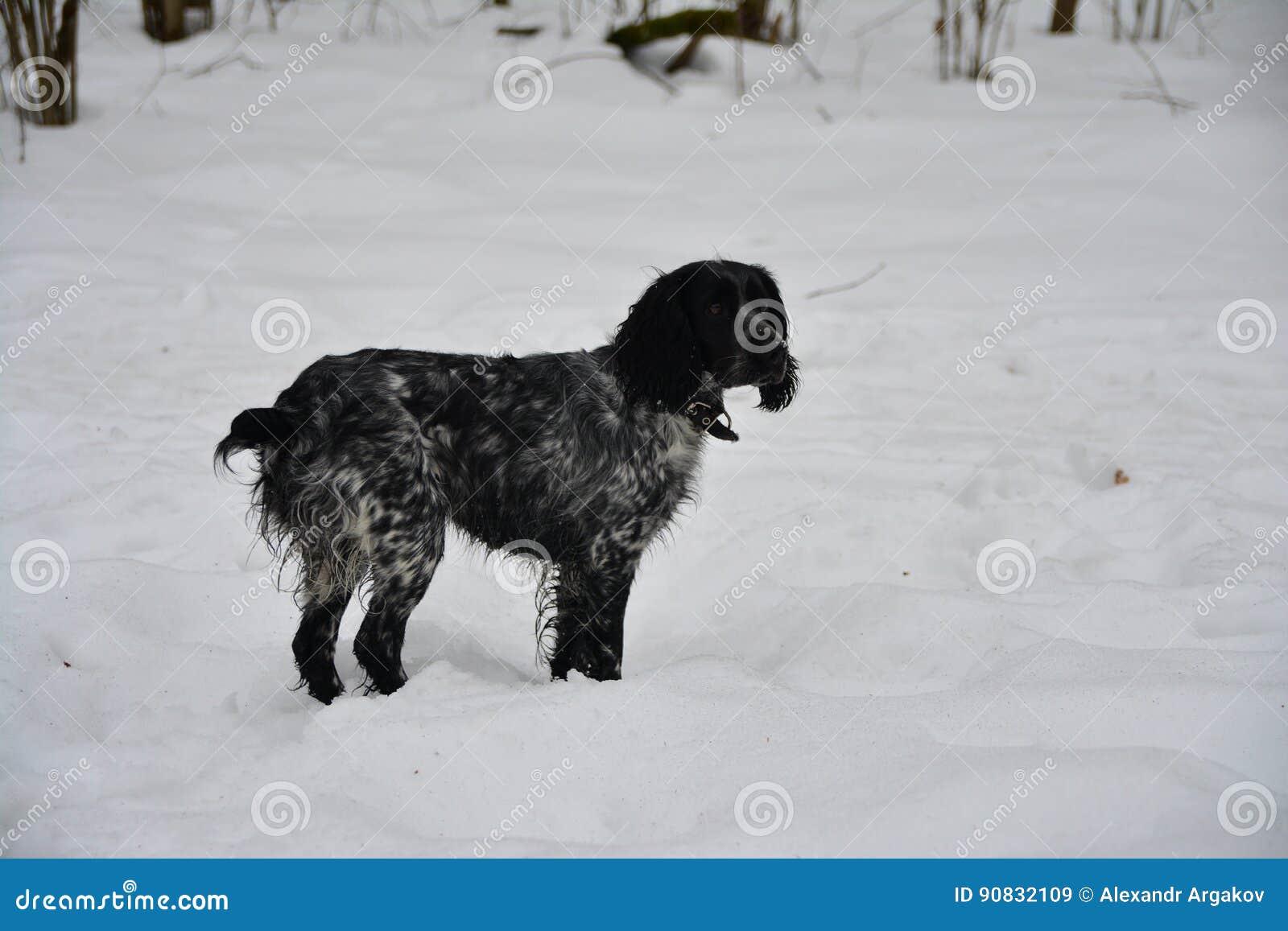Złowrogi pies