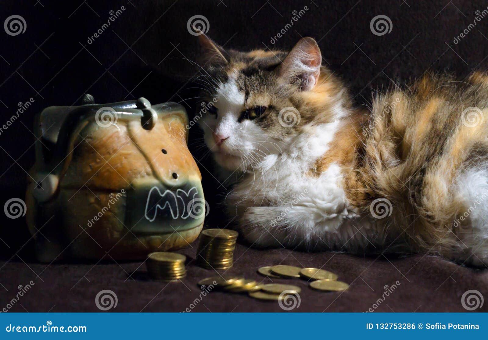 Zły kot na ciemnego brązu tle siedzi obok prosiątko banka