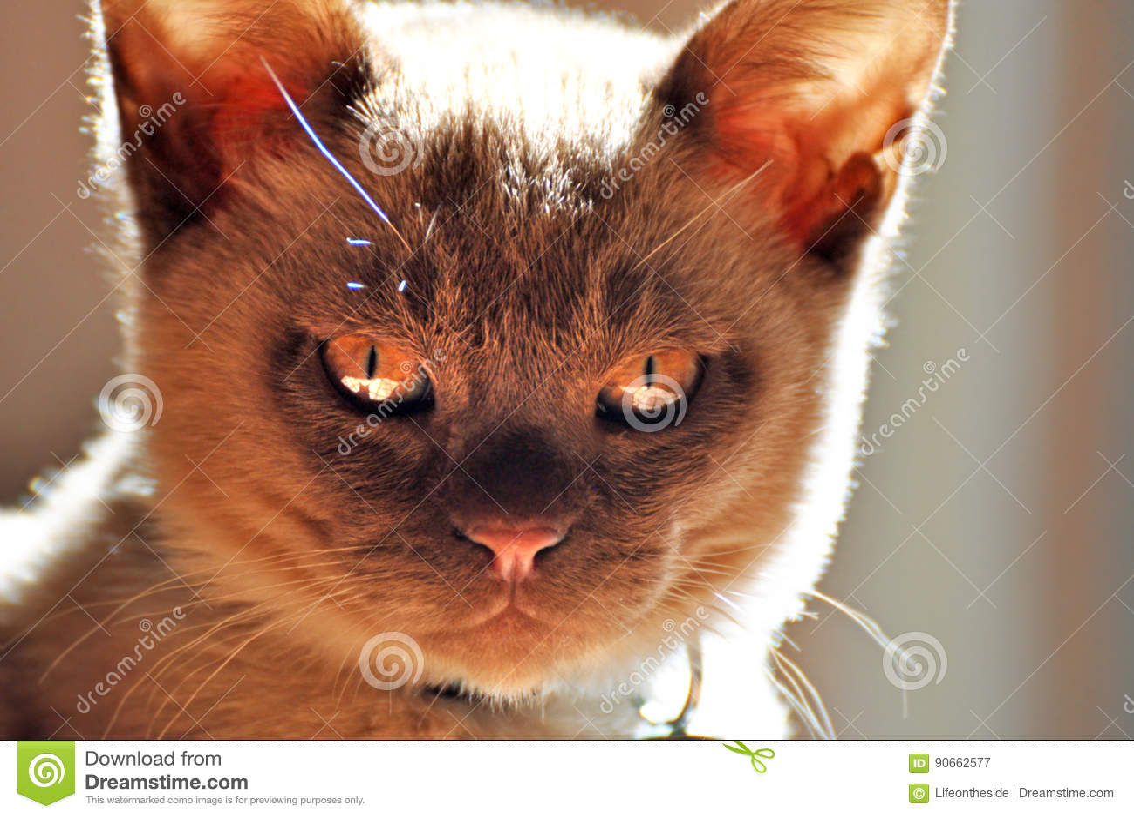 Zły mały kot