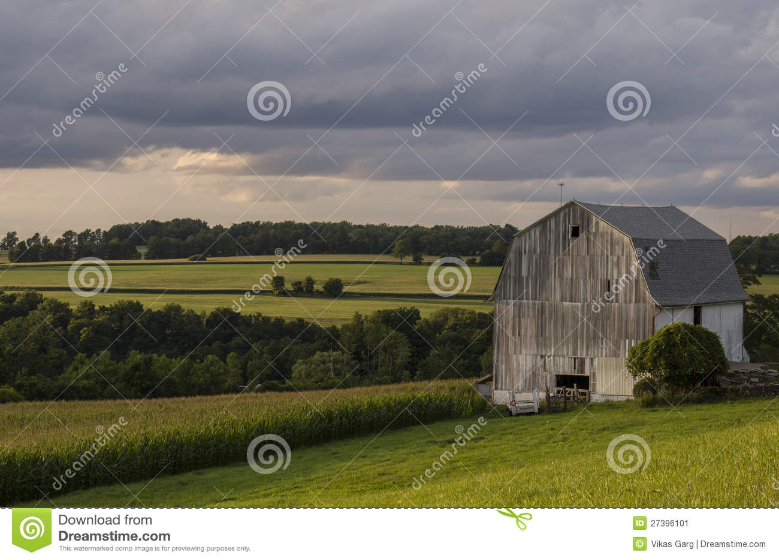 Z kukurydzanym polem biały Stajnia