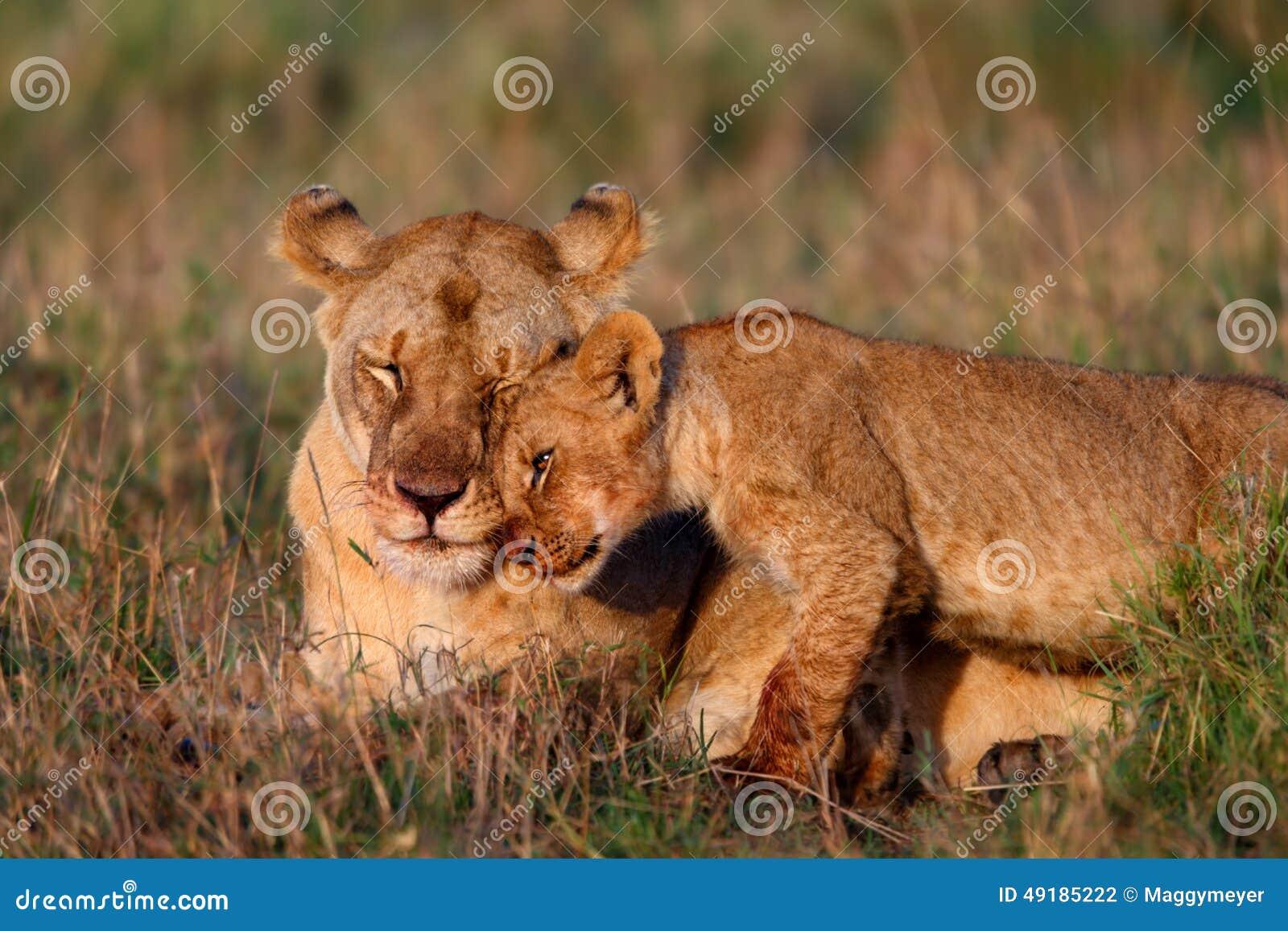 Z lisiątkiem lew matka