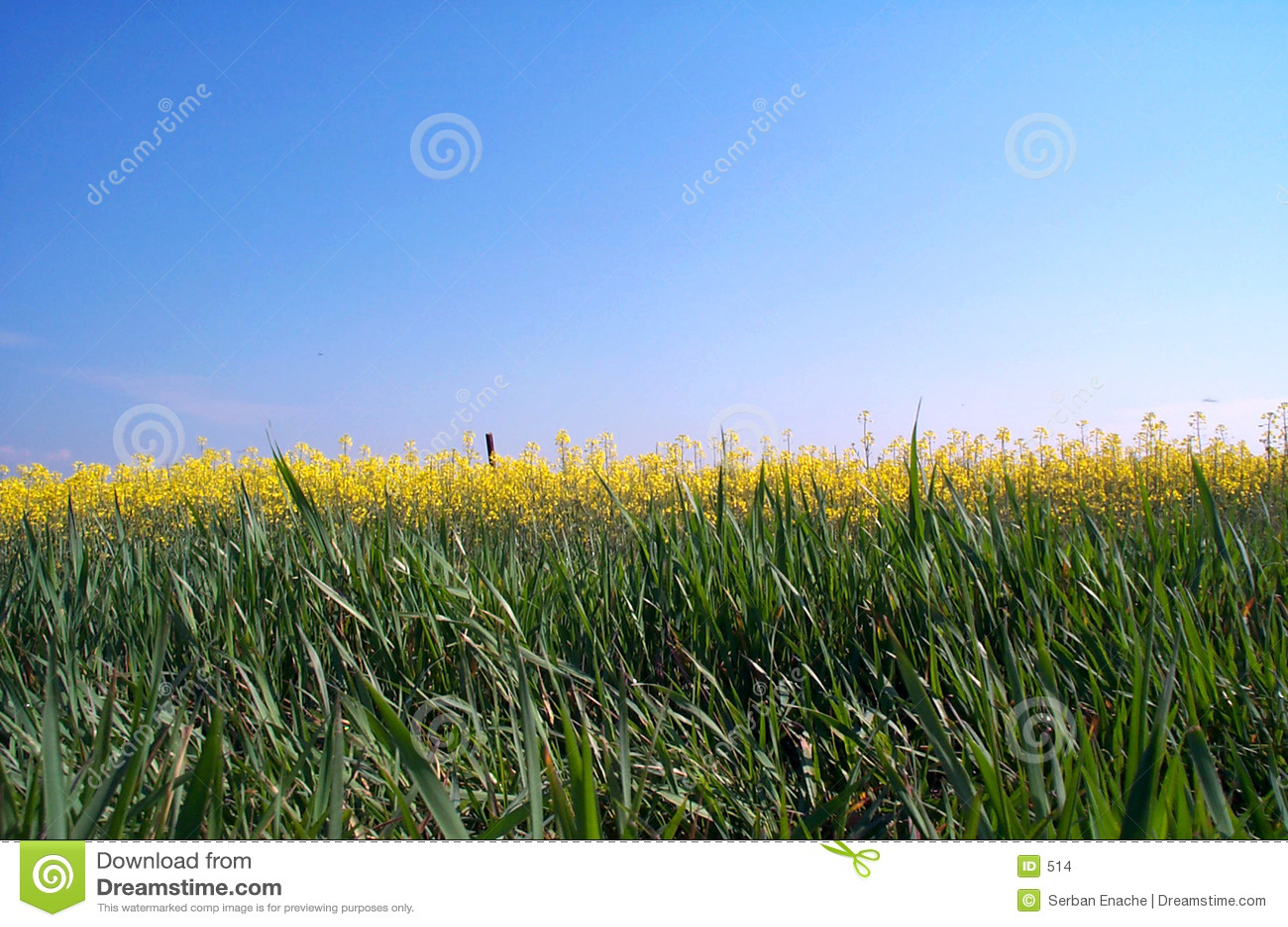 Złoty horyzont
