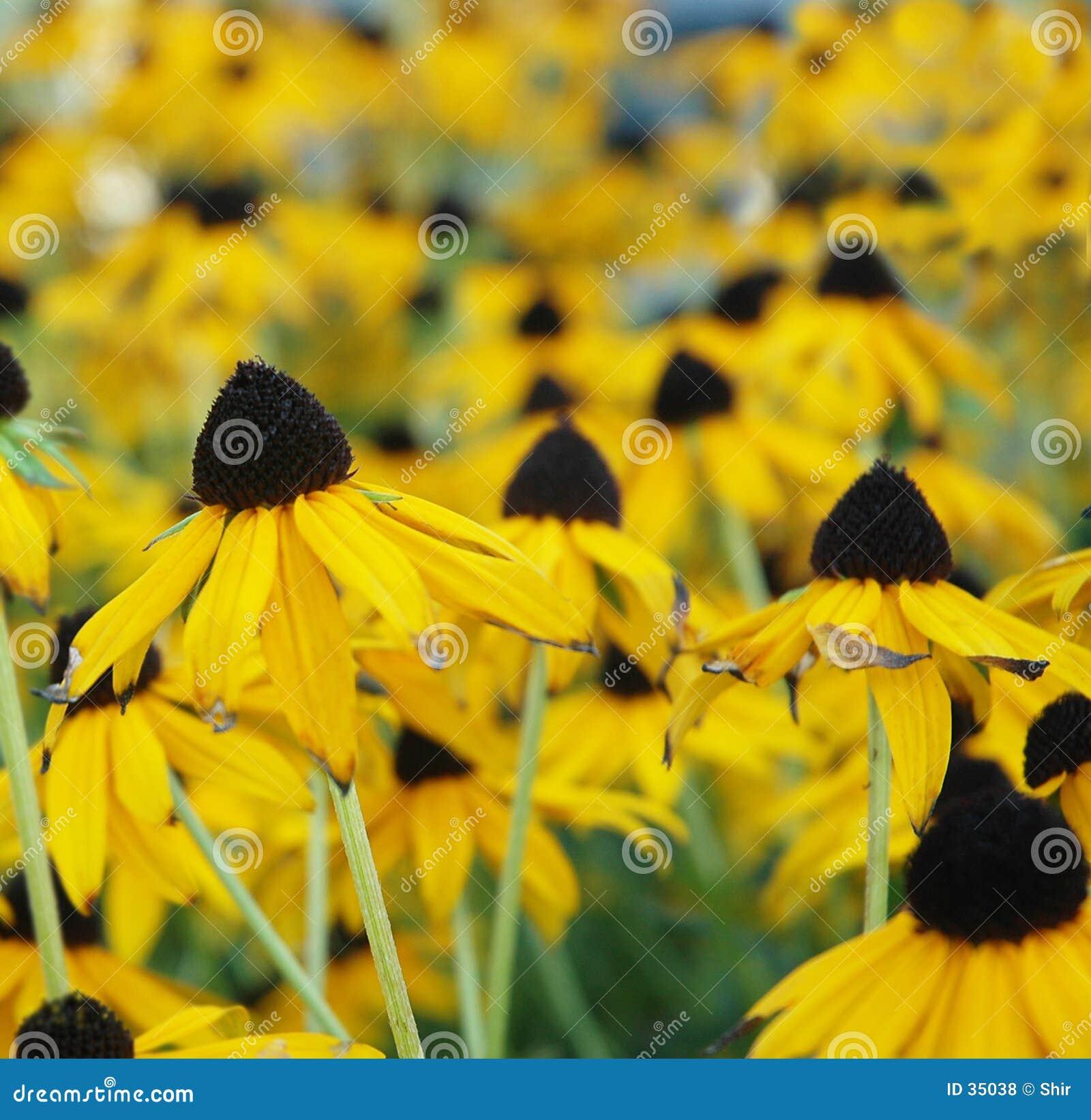 Download Z Podbitym Okiem Susan Pola Zdjęcie Stock - Obraz złożonej z eyed, greenbacks: 35038