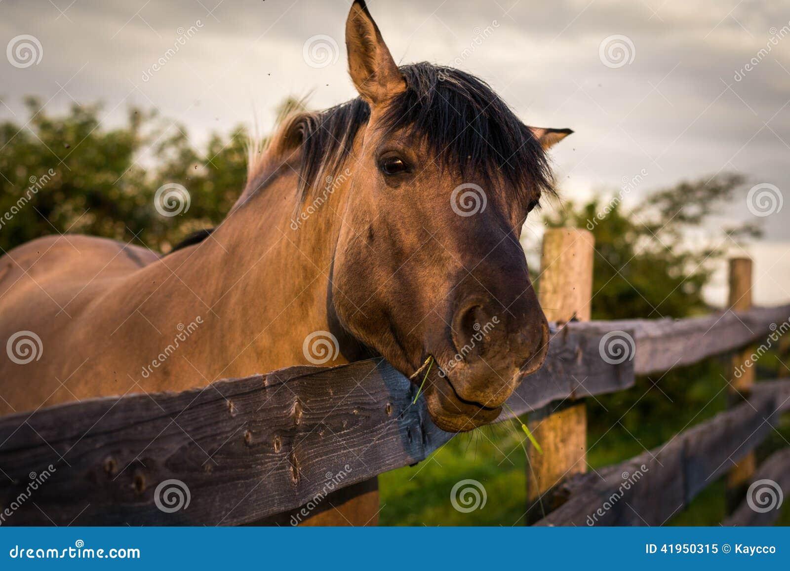 Za p?otowym koniem