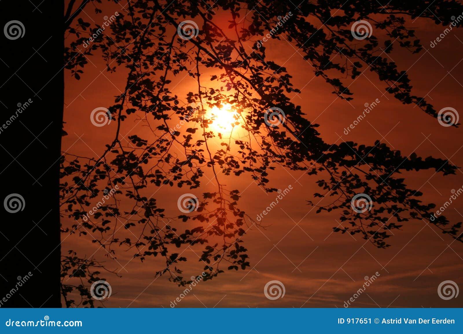 Za słońc drzew powstaniem