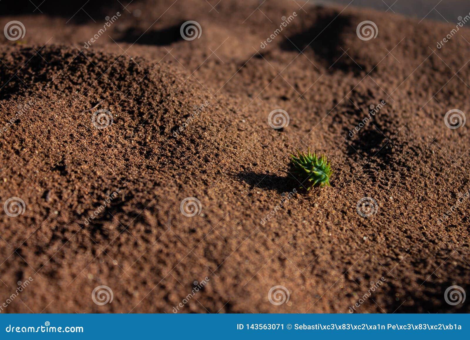 Zaad op woestijn