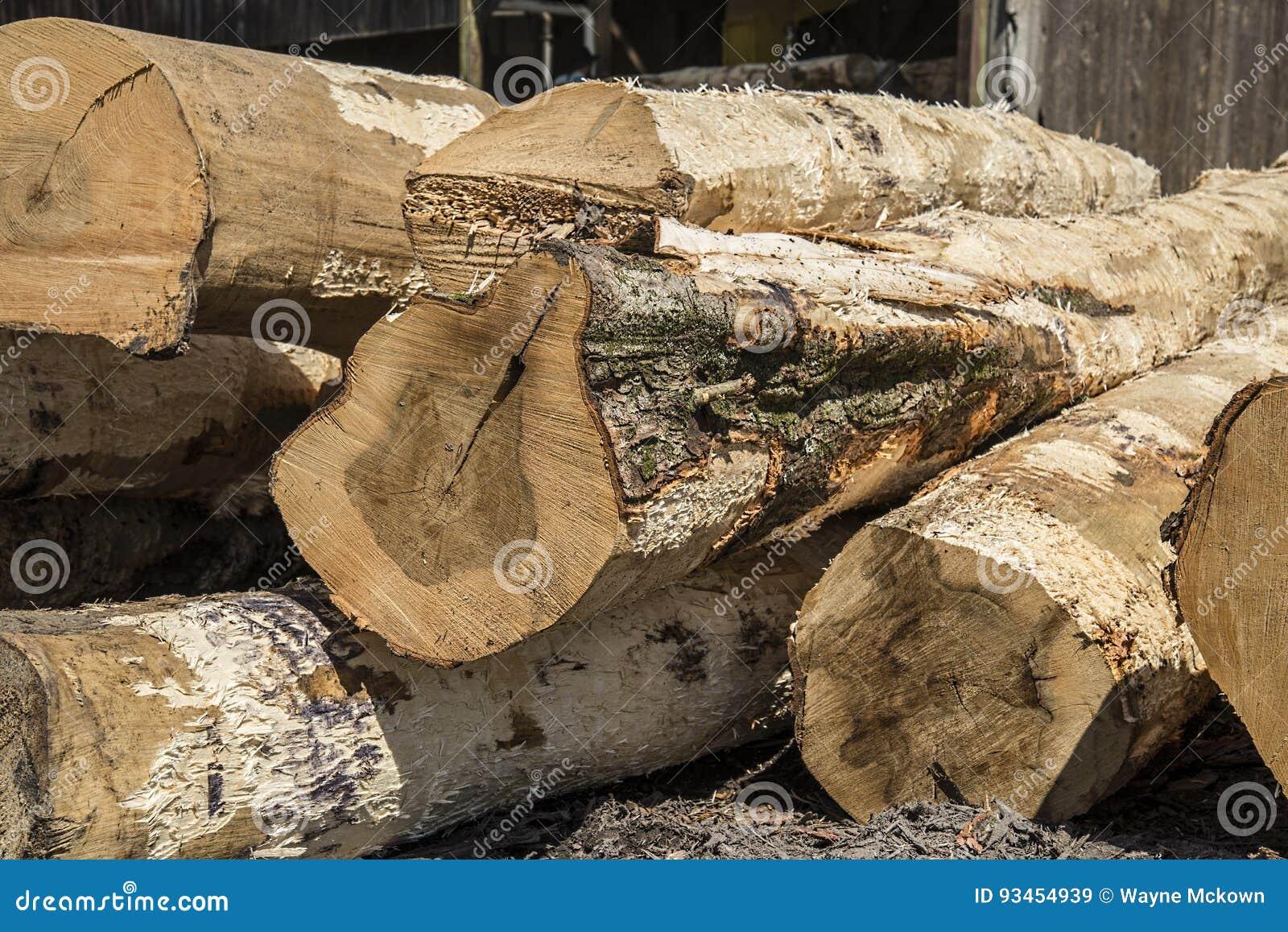 Zaaglogboeken, bomen, zaagmolen, timmerhout