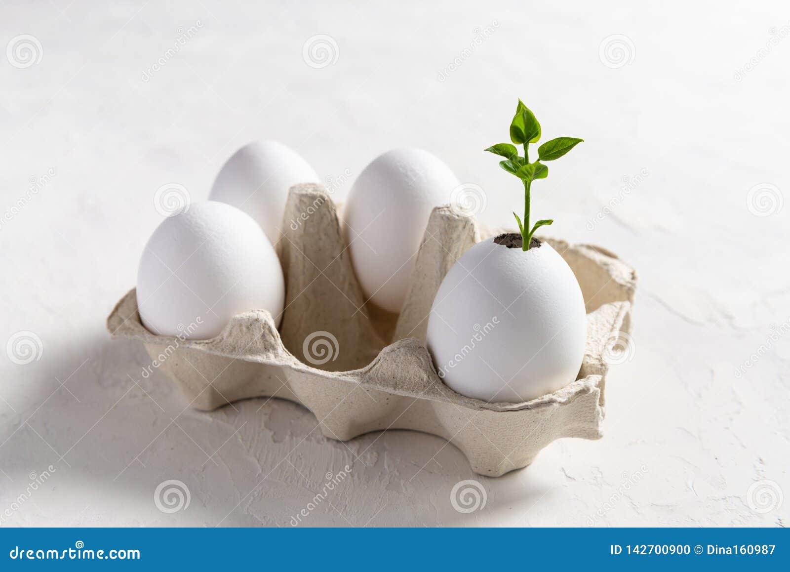 Zaailingsinstallatie in eierschaal, eco die, montessori, onderwijs, hergebruik, nieuw het levensconcept tuinieren Pasen
