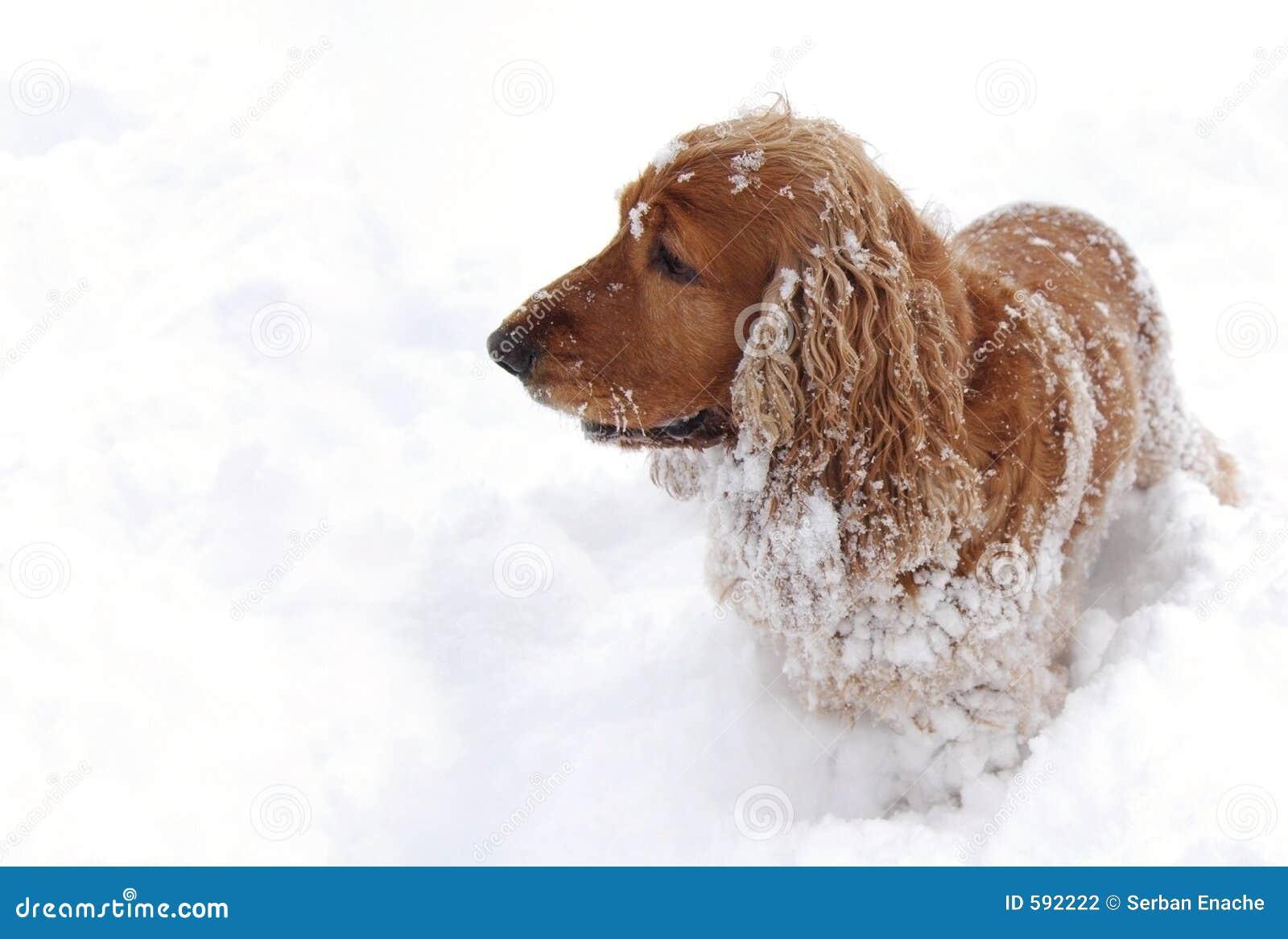 Zabaw 3 śnieg