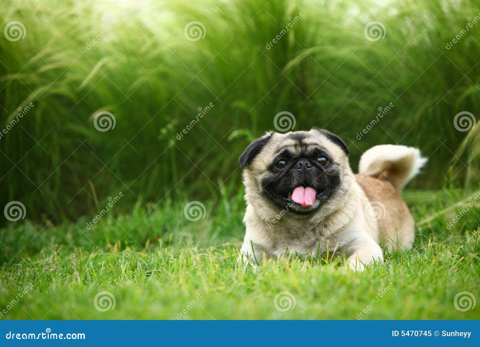 Zabawny pies pet