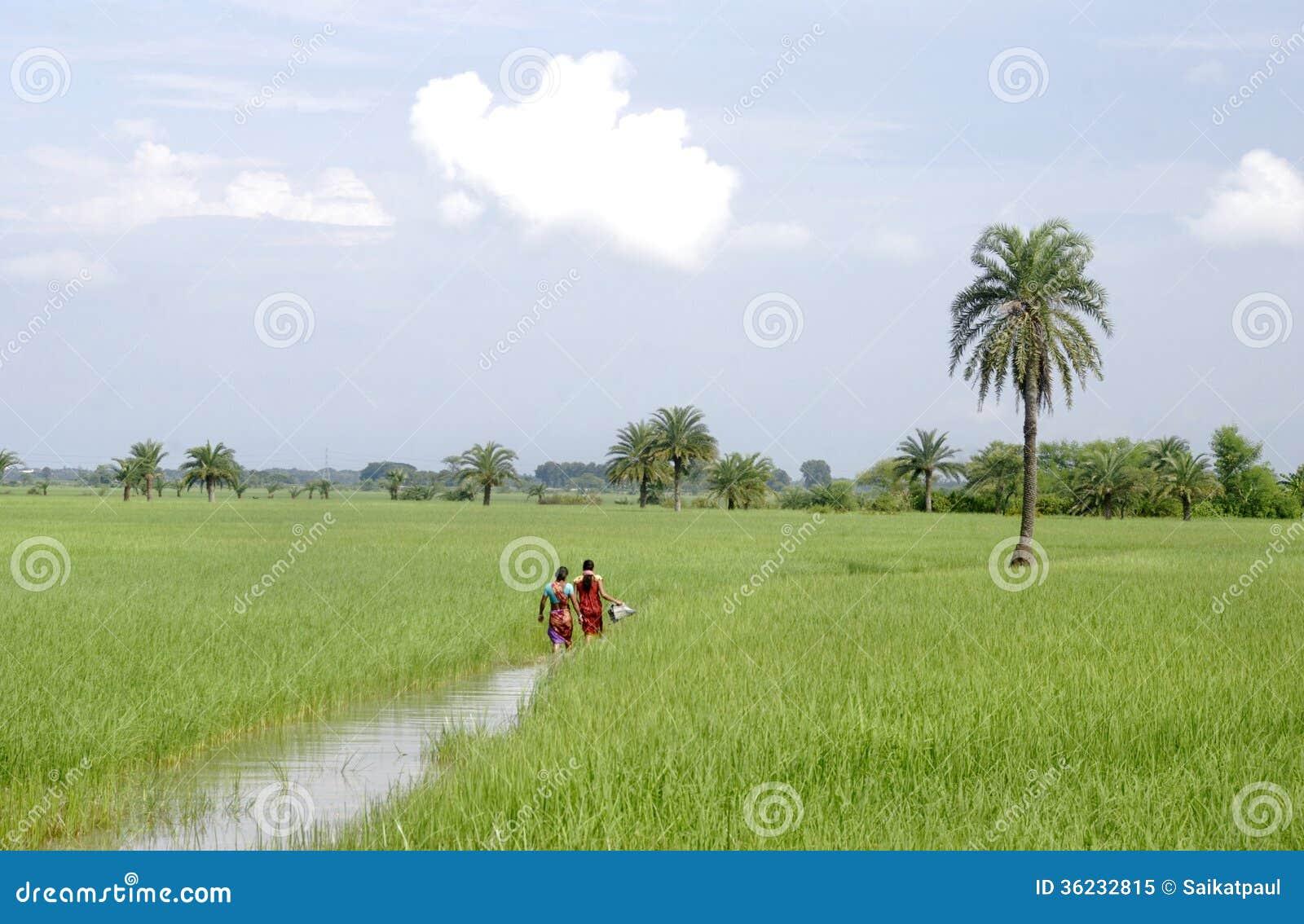 Zachodni Bengalia rolnictwo