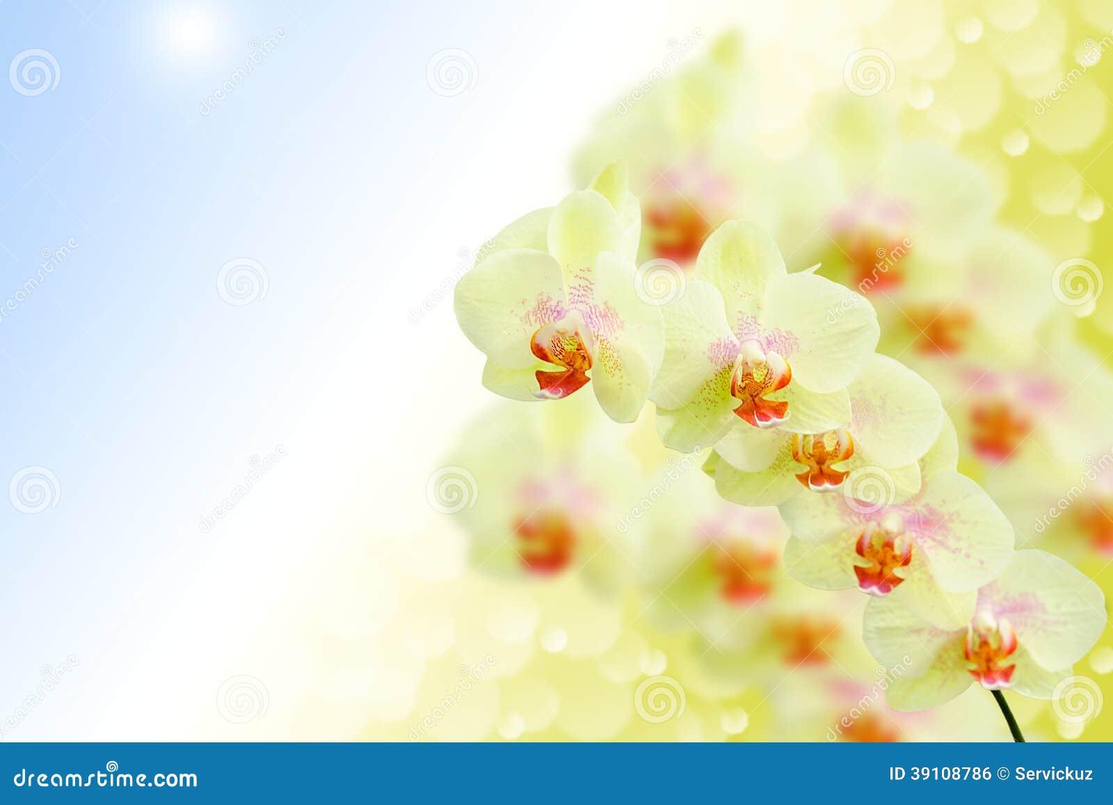 Zachte pastelkleur gekleurde orchideebloemen op aard