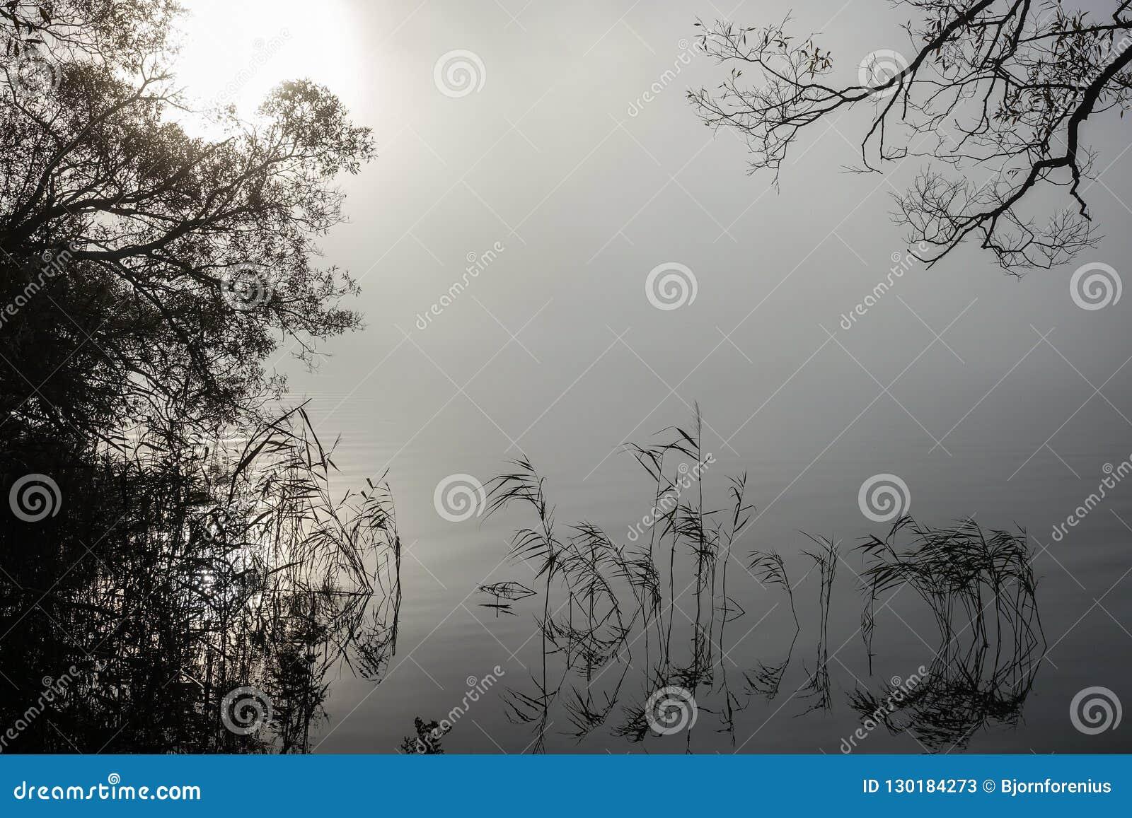 Zachte rimpelingen in nevelig landschap Vreedzame dikke mist