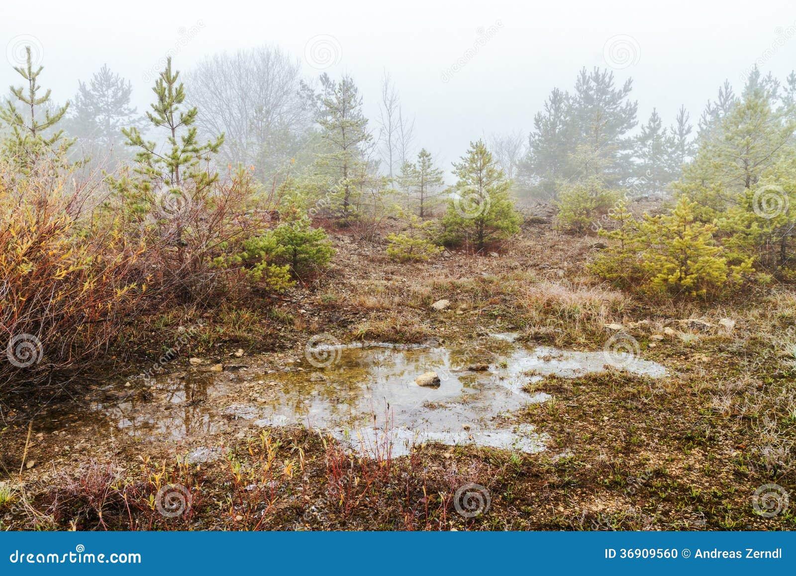 Zadziwiający Straszny zima krajobraz