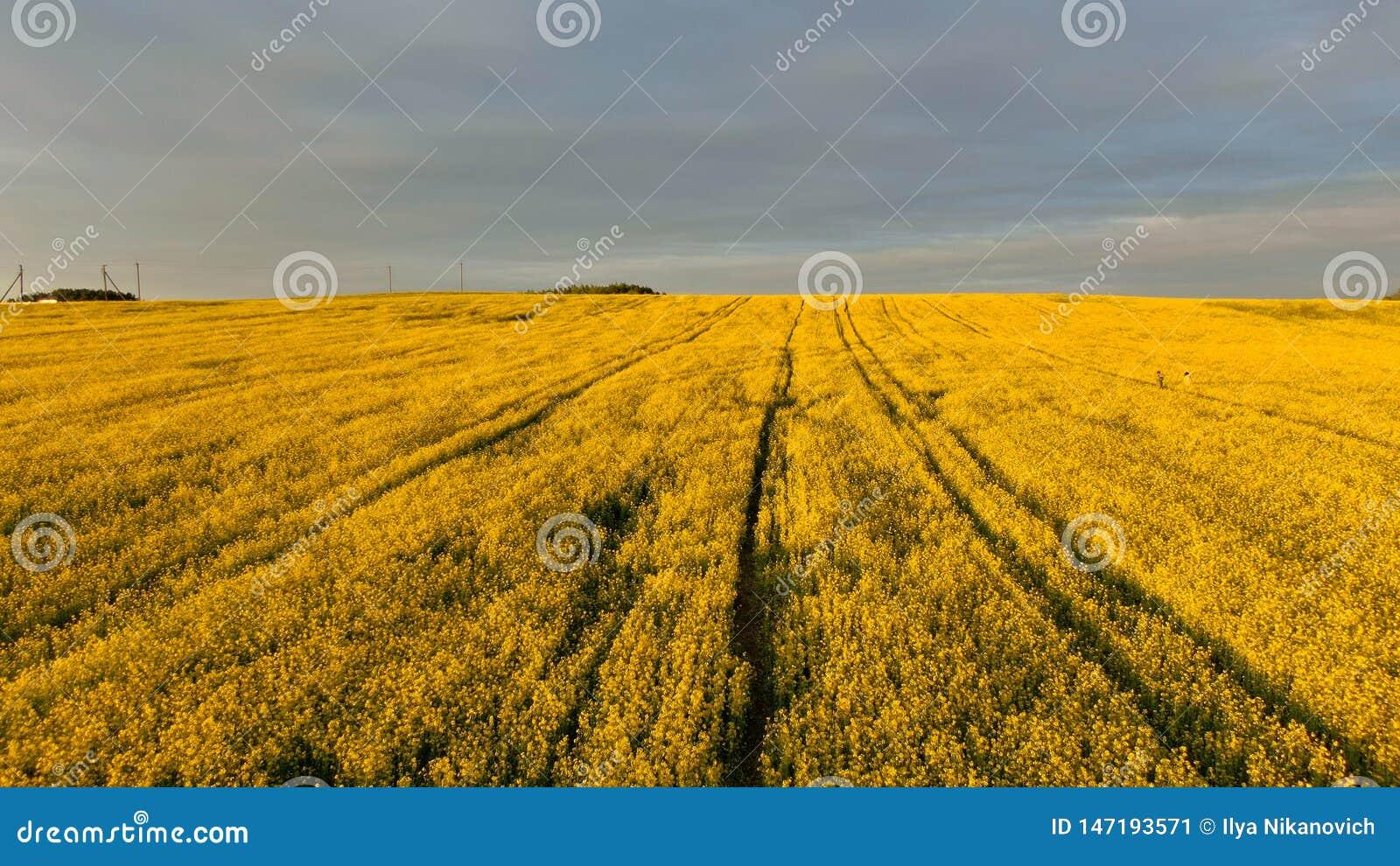 Zadziwiaj?cej wiosny kolorowy krajobraz Pi?kny wiosna krajobraz z kwitnienie rap polem