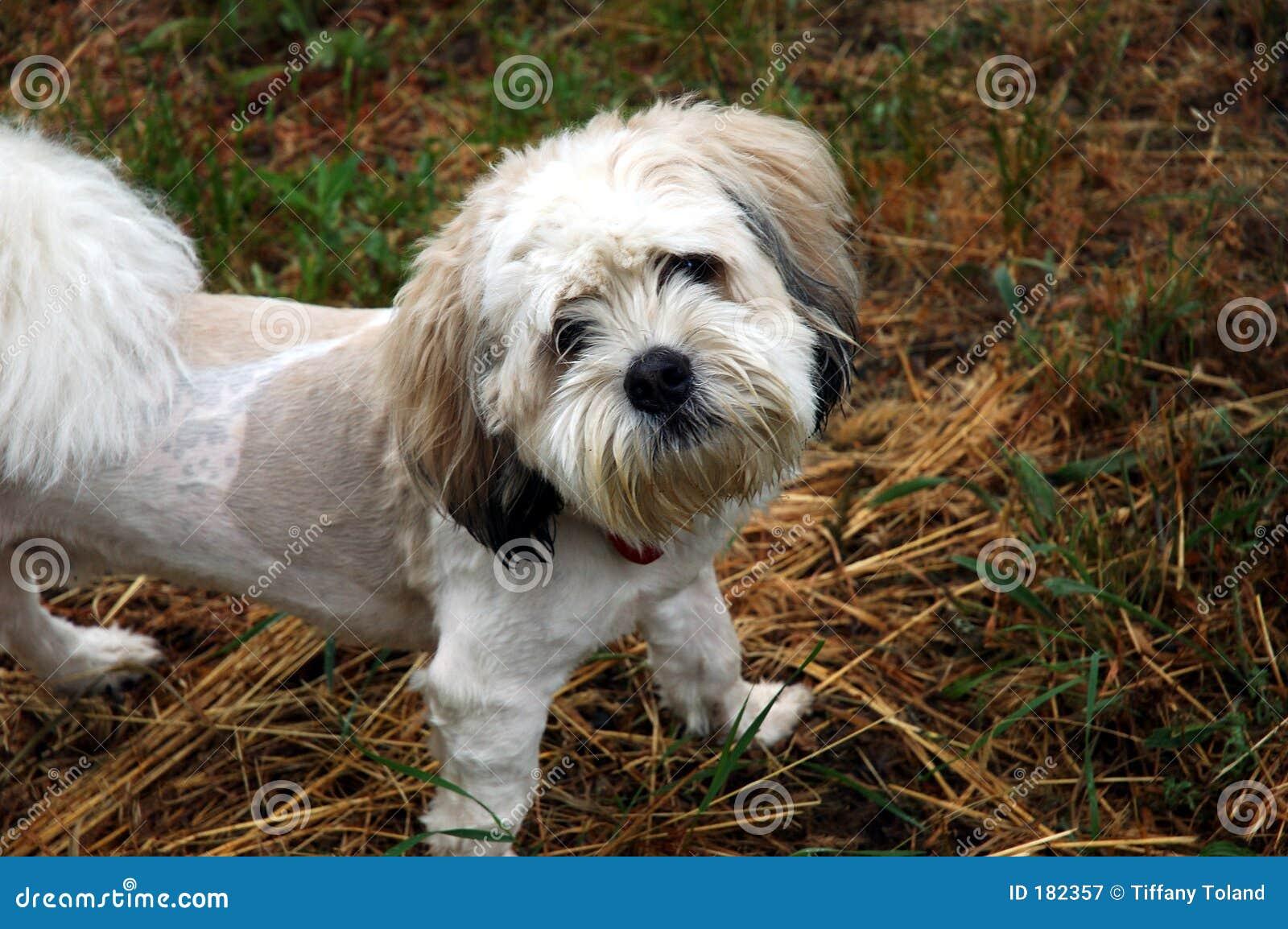 Zagubiony pies