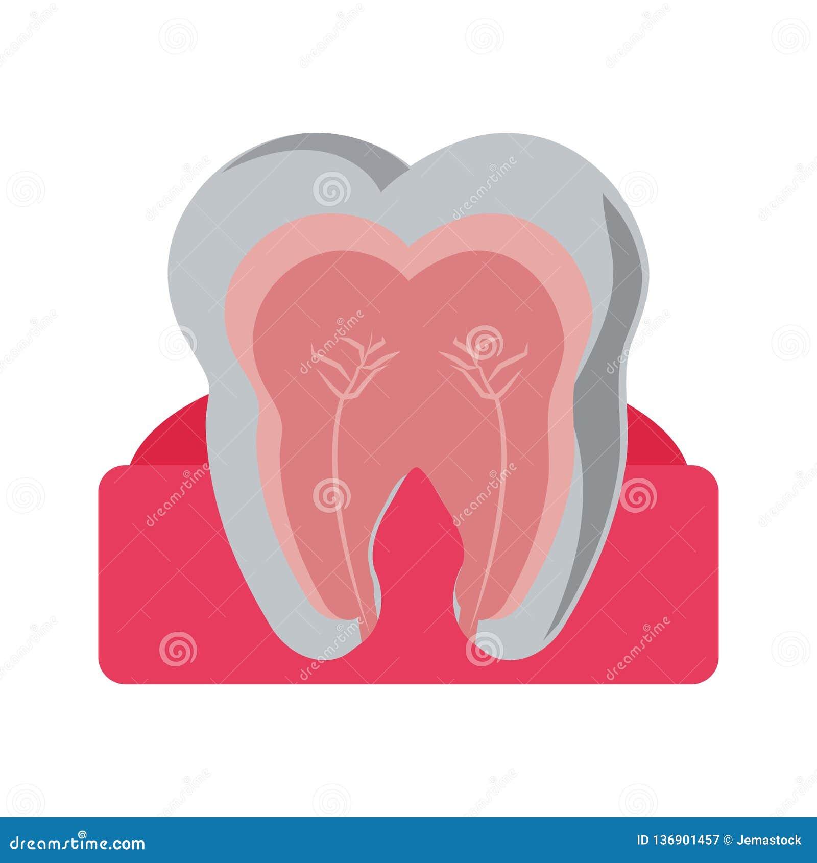 Zahn mit nervösem im Gummi