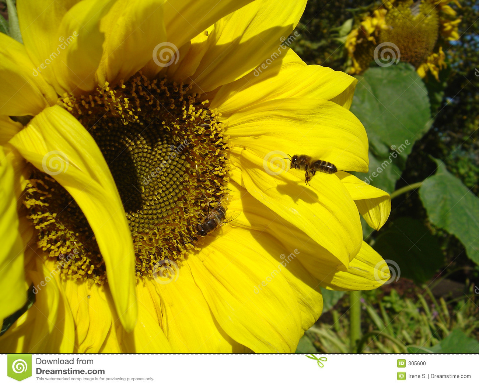 Zajęty pszczół