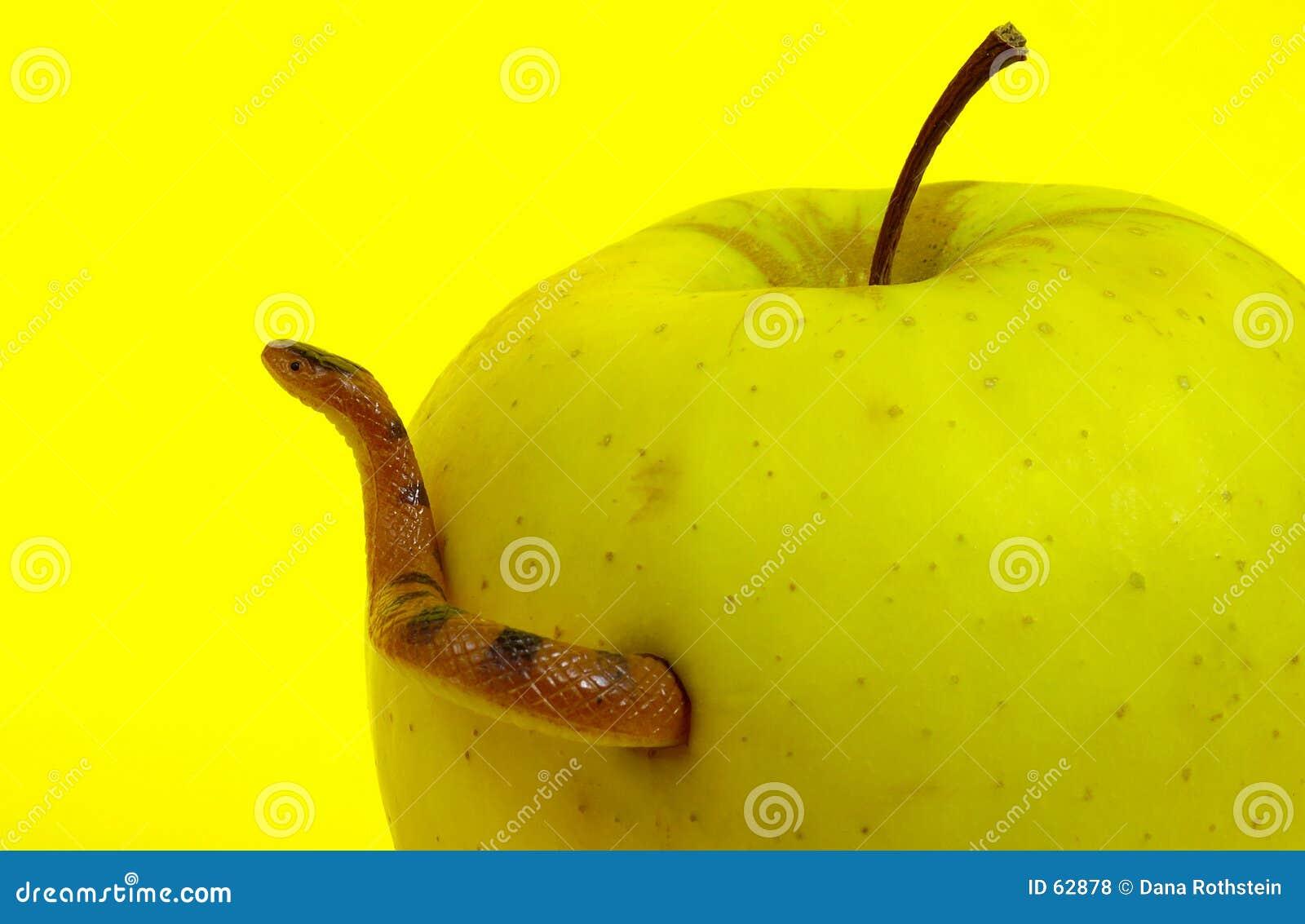 Zakazane owoce wąż