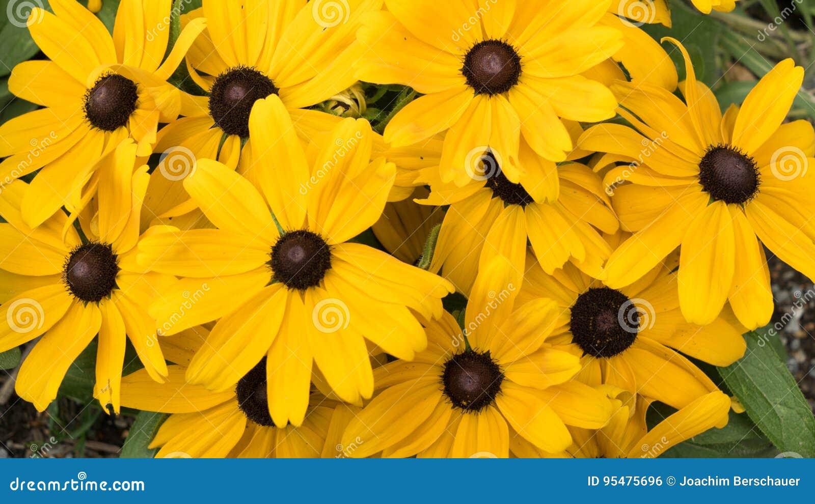 Zakończenie żółci piękni kwiaty