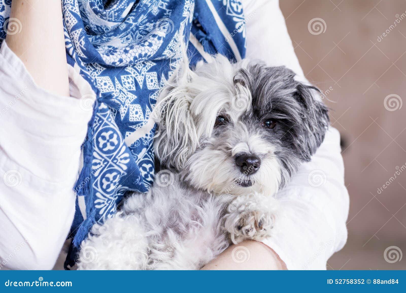 Zakończenie biały pies w kobiety uściśnięciach