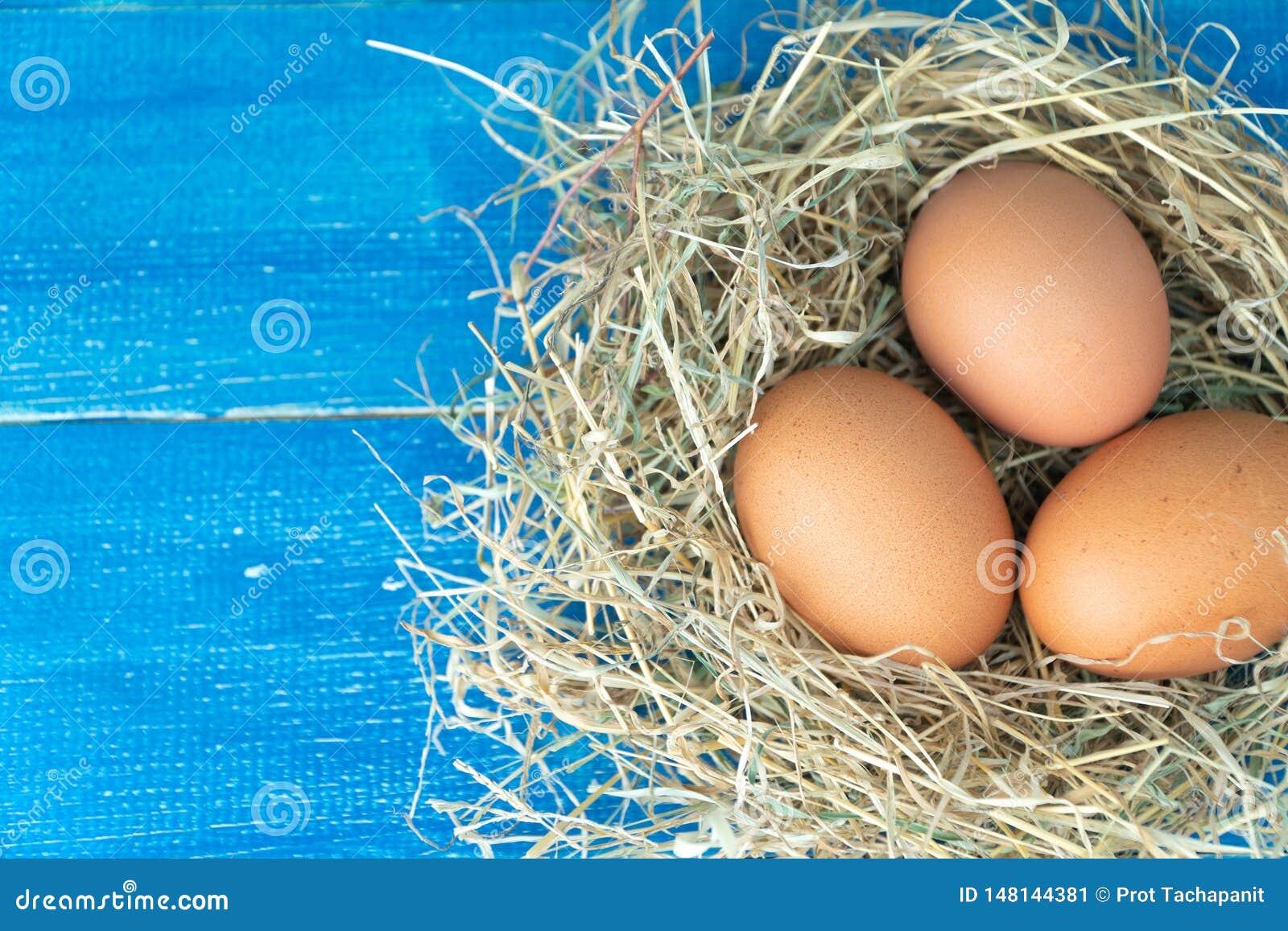 Zakończenie w górę świeżych brązu kurczaka jajek w siana gniazdeczku na błękitnym drewnianym tle Poj?cie organicznie jajka, bezp?