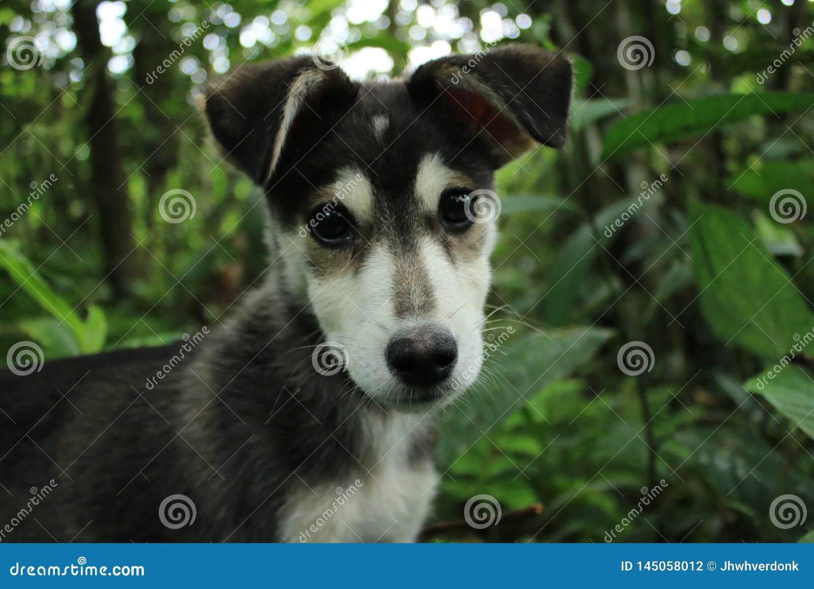 Zakończenie w górę czerni z białą niewinnie i śliczną głową stary szczeniak z lasem w tle