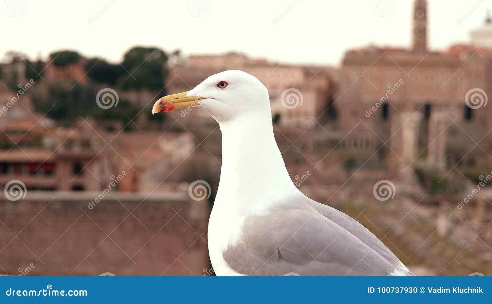 Zakończenie widok biały seagull obsiadanie na dachu wierzchołku i patrzeć wokoło Ptasia komarnica daleko od przeciw tłu stary mia