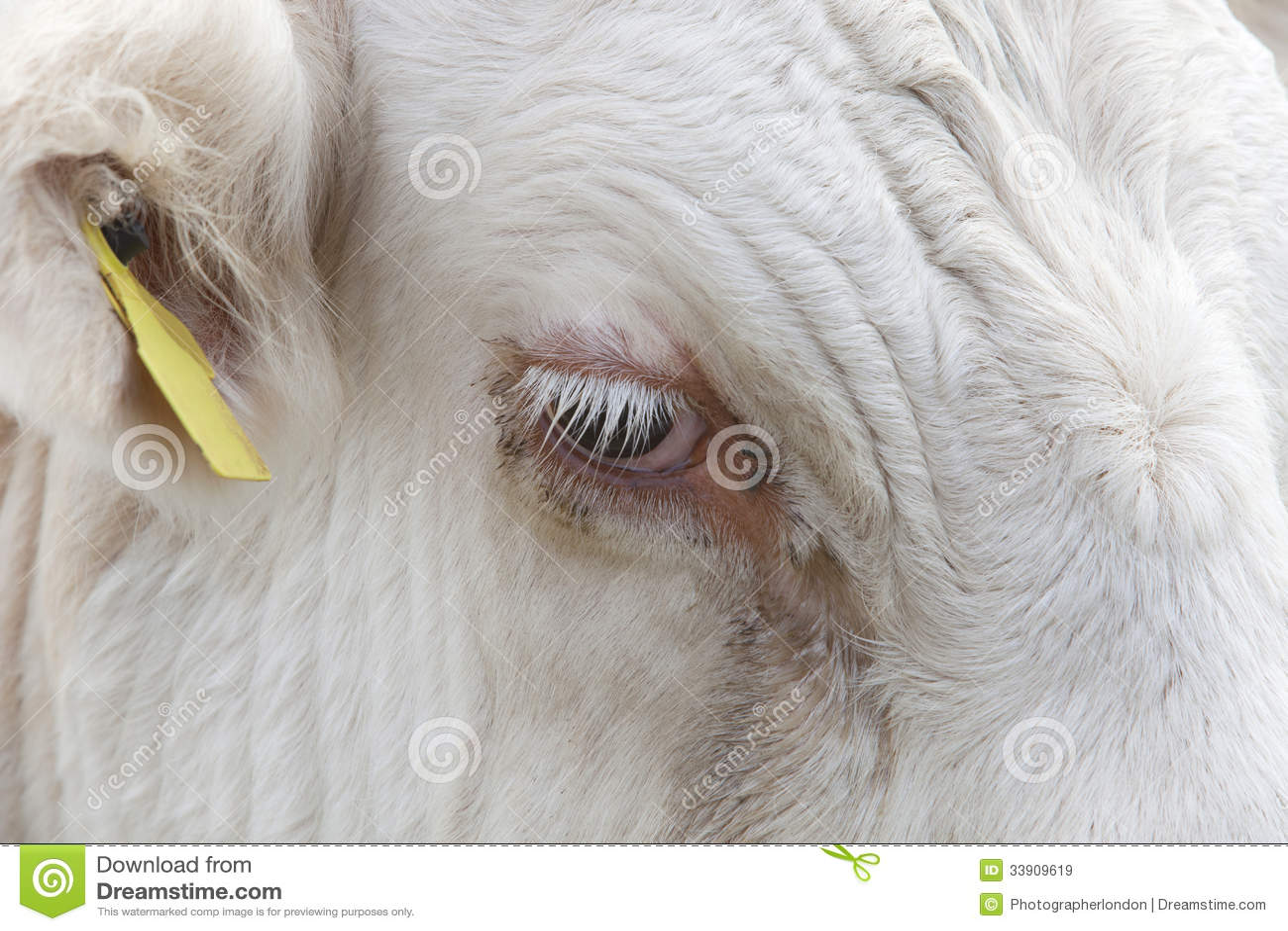 Zakończenie widok krowy oko w Essex, Zjednoczone Królestwo