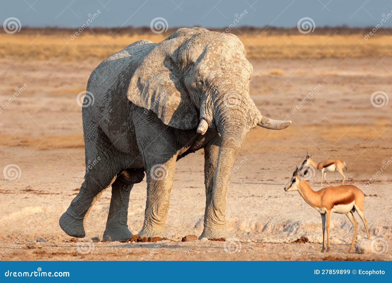Zakrywający w błocie afrykański słoń