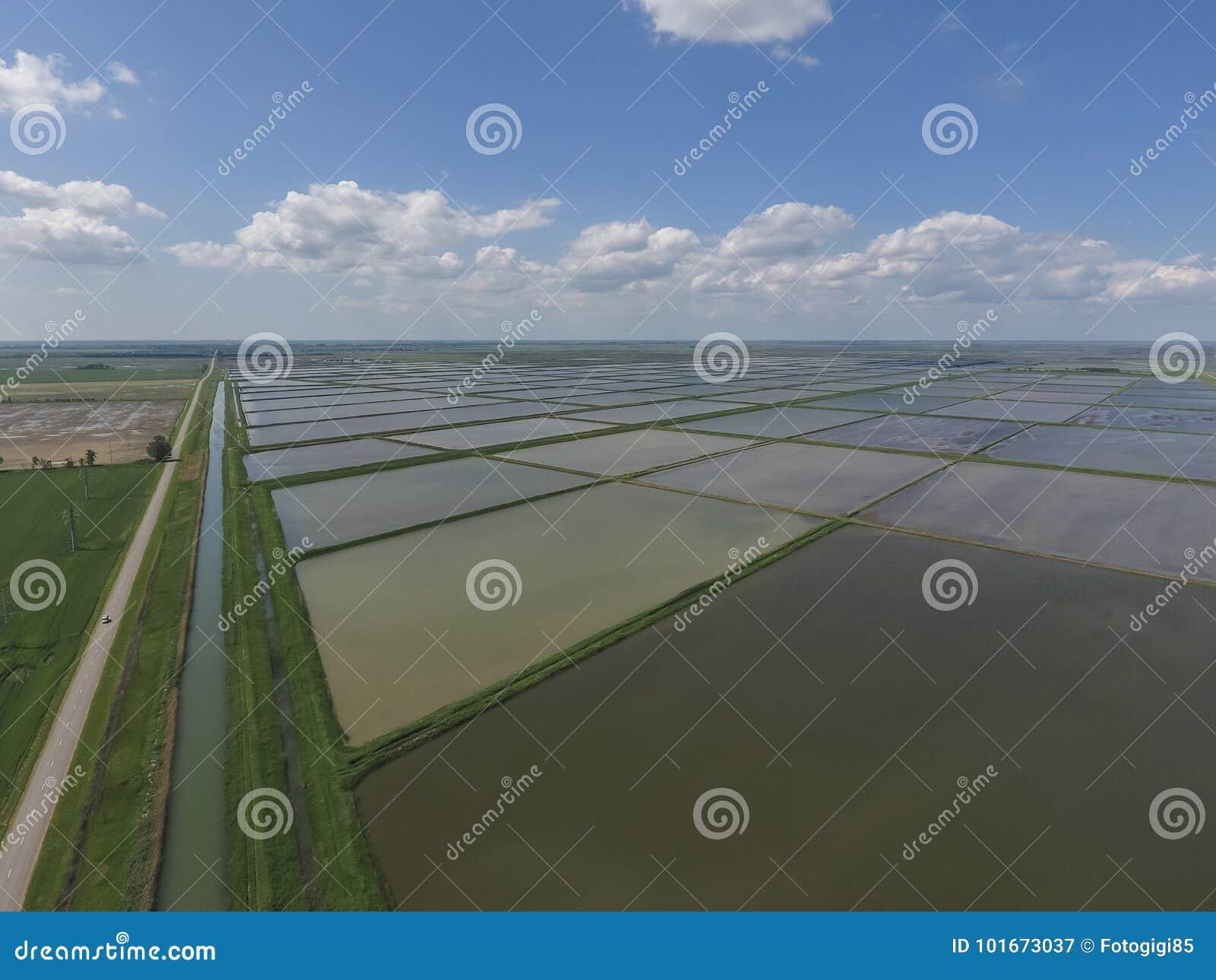 Zalewający ryżowi irlandczycy Agronomic metody rosnąć ryż w f