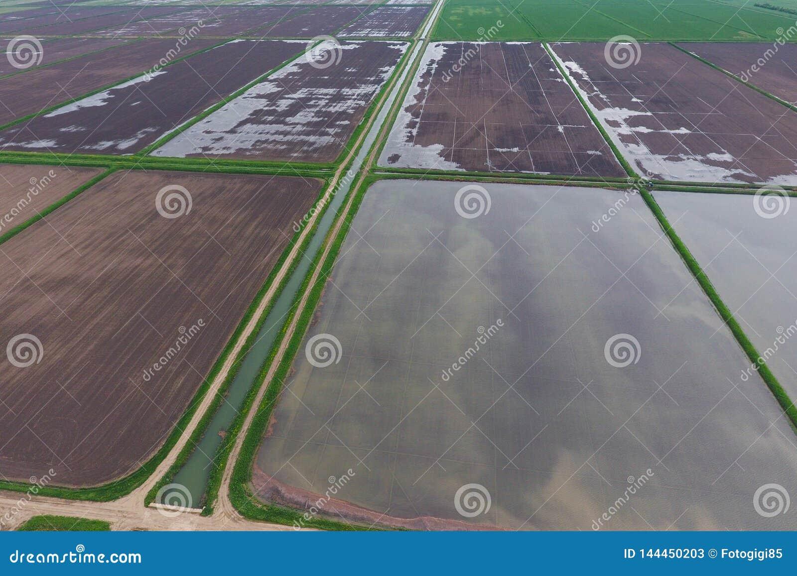 Zalewający ryżowi irlandczycy Agronomic metody rosnąć ryż w polach