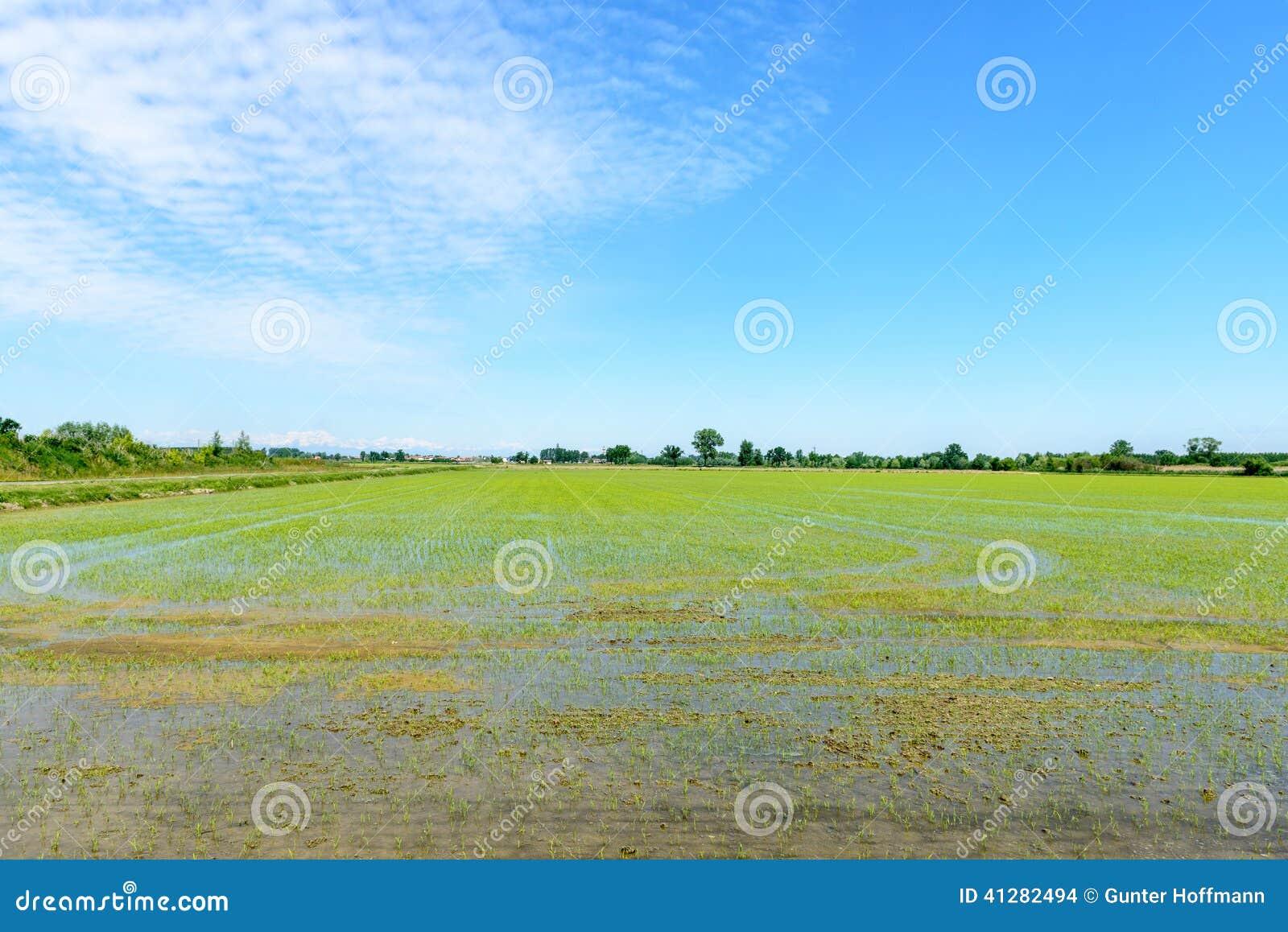 Zalewający ryżowi pola, Lomellina (Włochy)