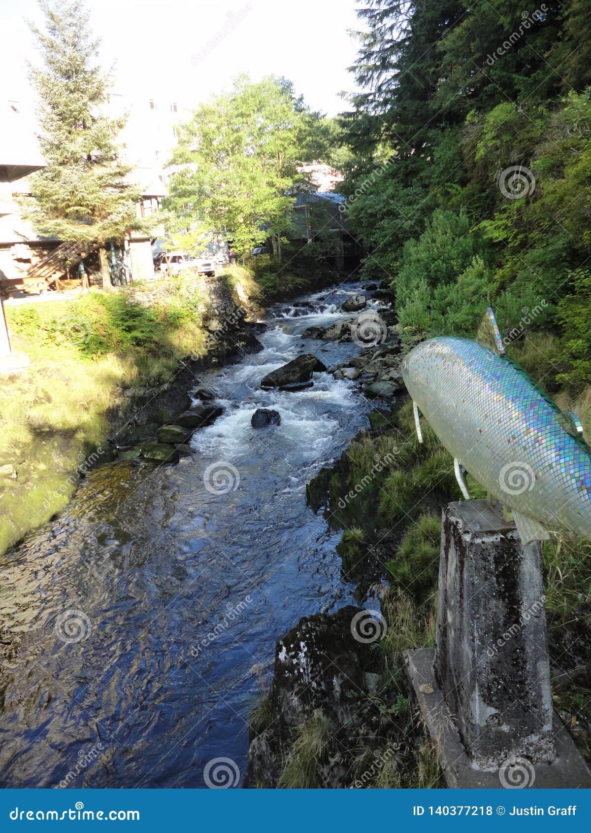 Zalm in Stroom tijdens Zalm die in Alaska in werking wordt gesteld Vissen die naar hun plaats van geboorte van zoutwater aan kuit