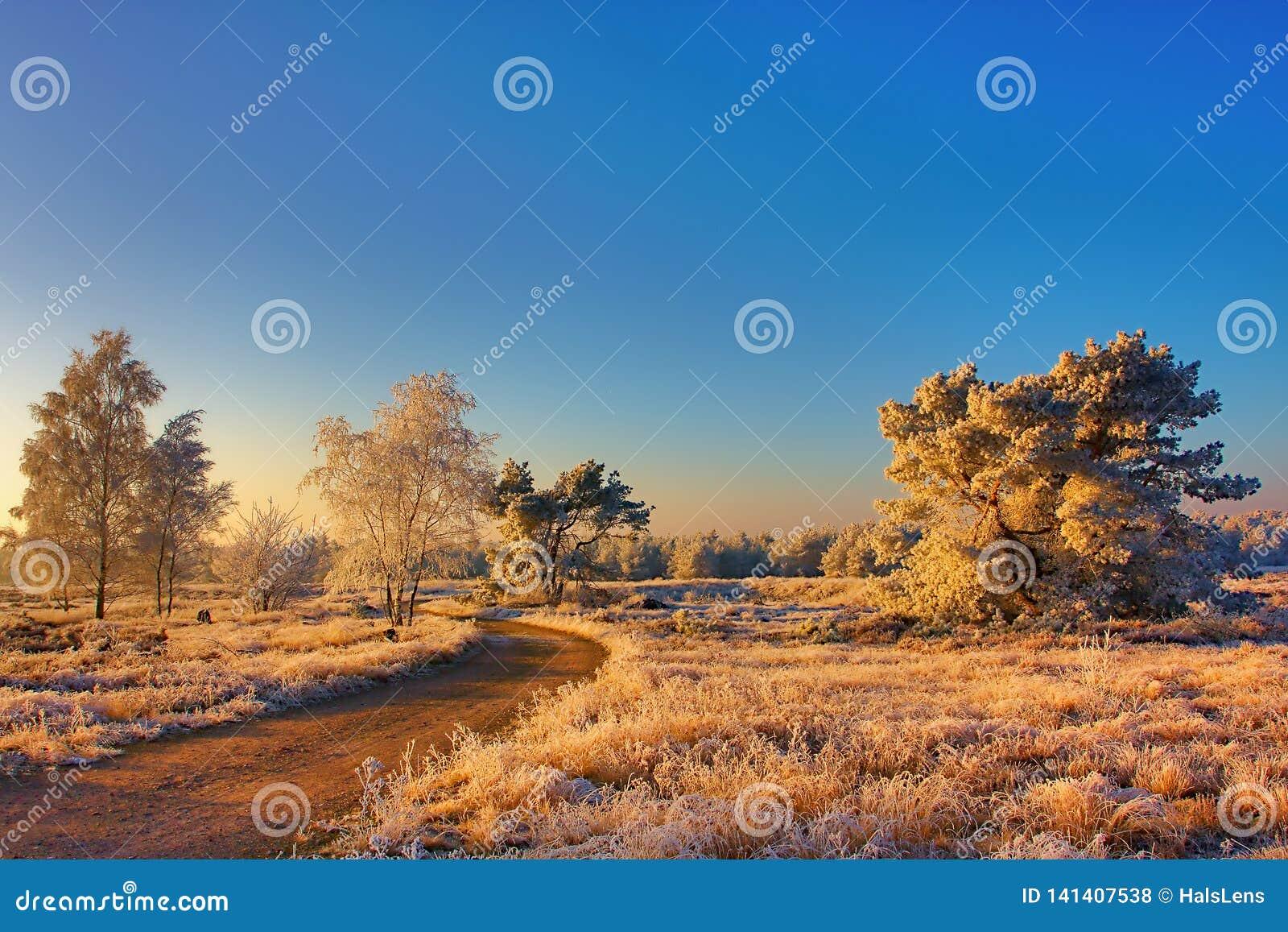 Zamarznięty krajobraz w ranku świetle