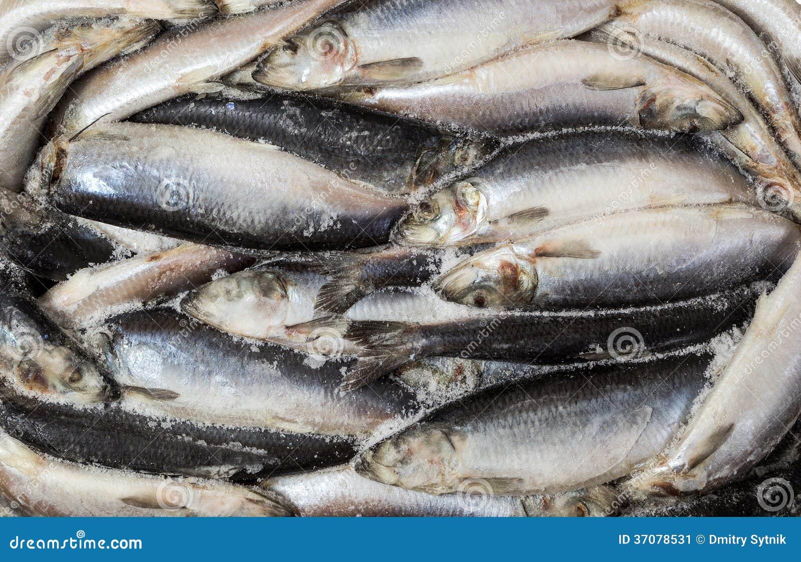 Download Zamarznięta ścierwo Ryba W Cegle Dla Handlu I Tła Obraz Stock - Obraz złożonej z połów, cegła: 37078531