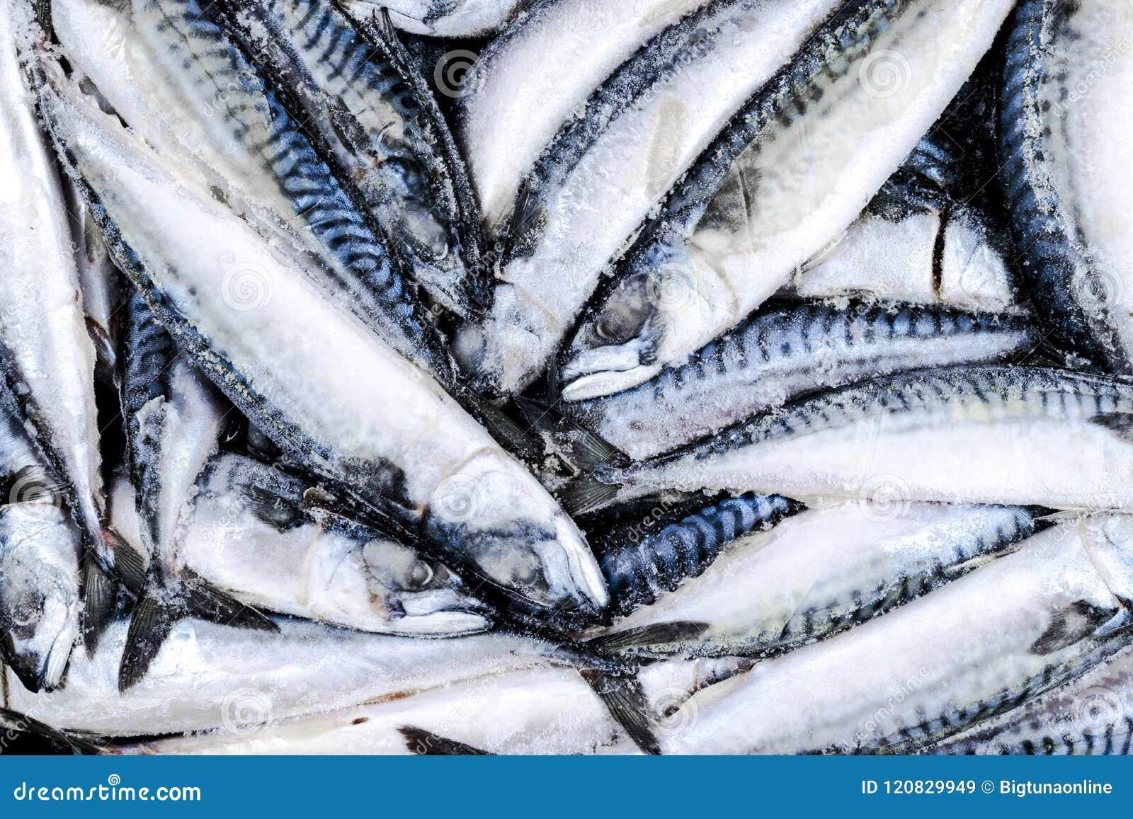 Zamarznięta makrela Zamarznięta grupa ryba lukrowa atlantycka ryba makrela Makrela wzór Skumbriowa tekstura