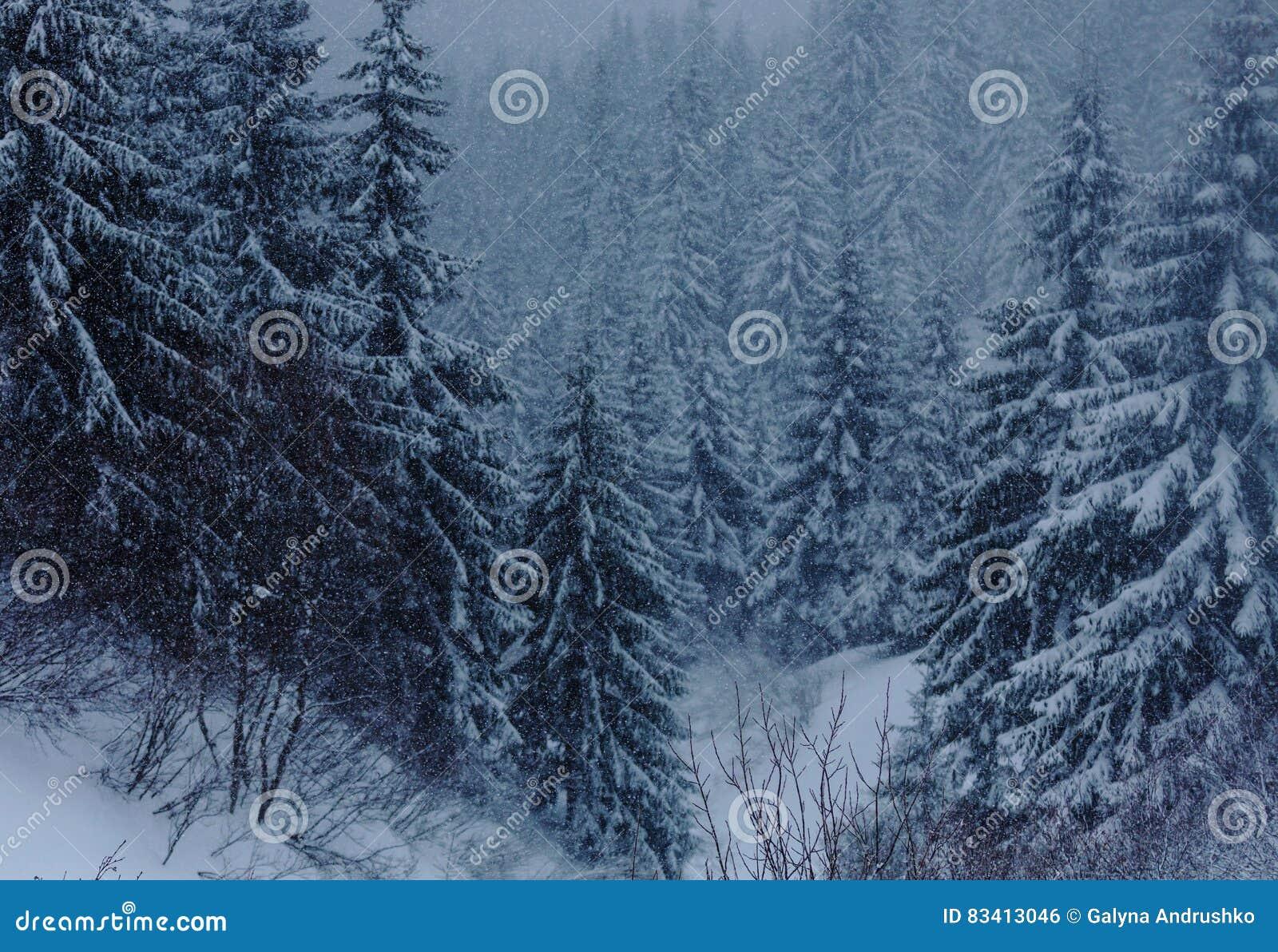 Zamarznięty las