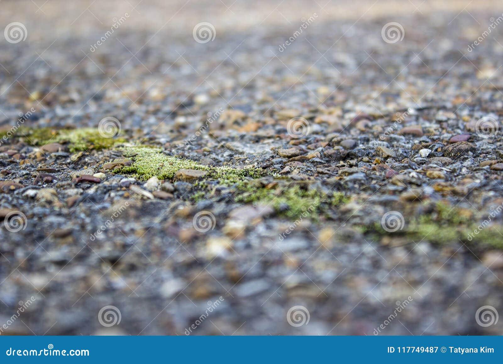 Zamazany tło, pęknięcie w starym asfalcie, przerastającym z zielonym mech