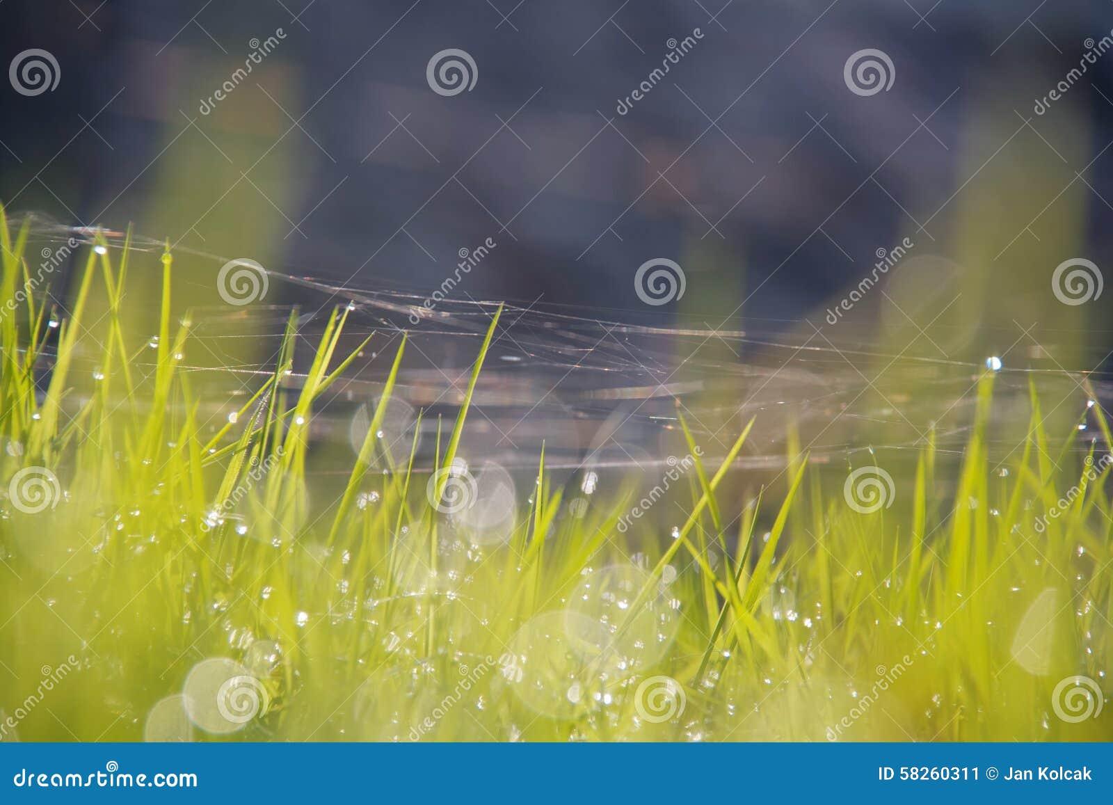 Zamkniętego rosy kropelek trawy liść ranek zamknięta woda