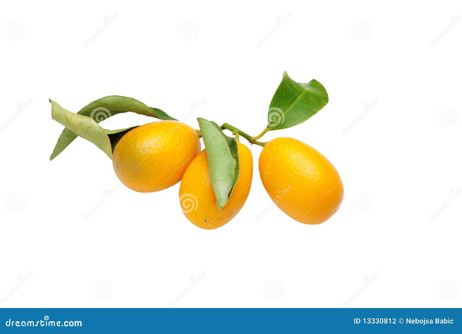 Zamknięty zamknięci kumquats