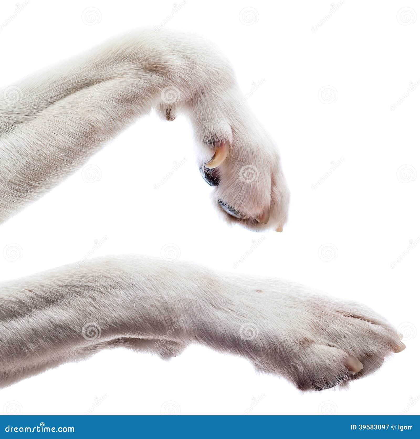 Zampe di un cane immagine stock immagine di isolato - Colorazione immagine di un cane ...