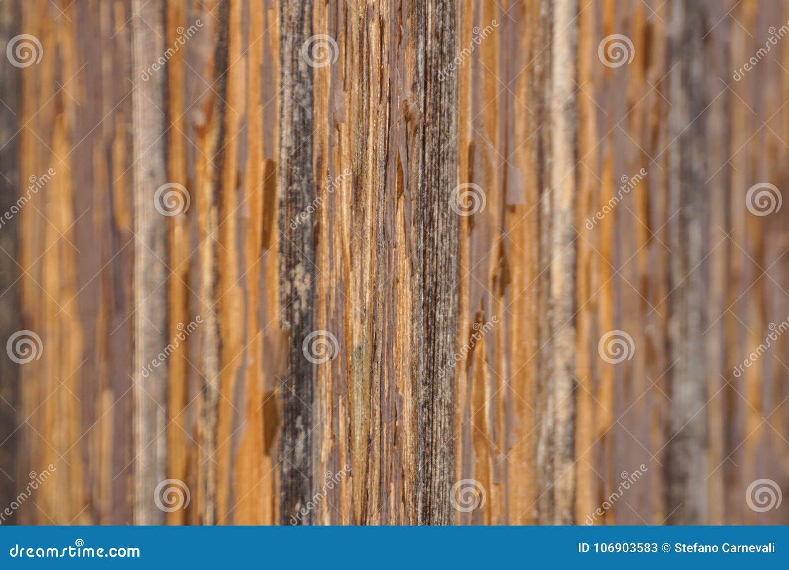Zamyka up drewniany jetty drewniana deska dla spaceru Selekcyjna ostrość