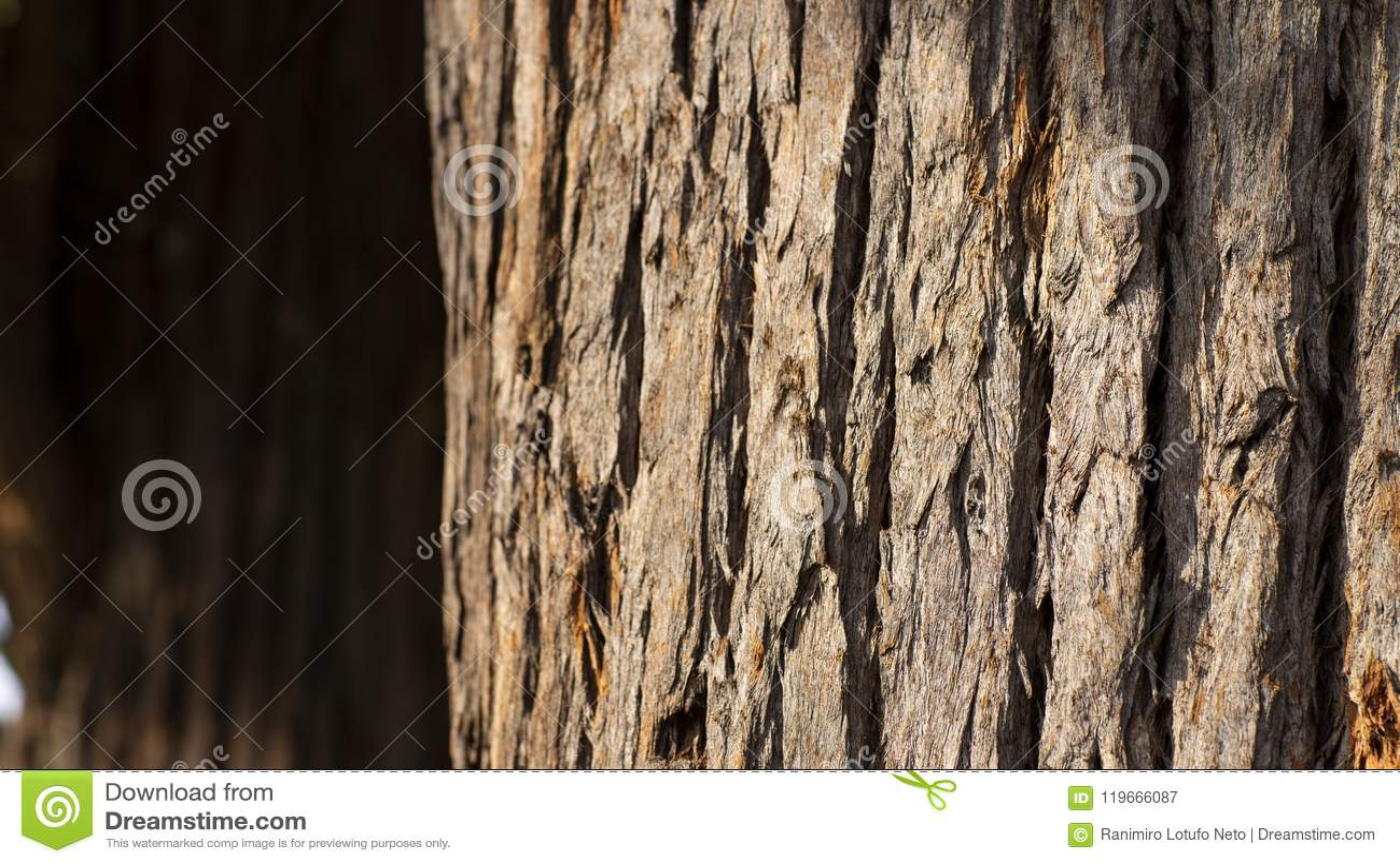 Zamyka up drzewny bagażnik i swój textured barkentyna