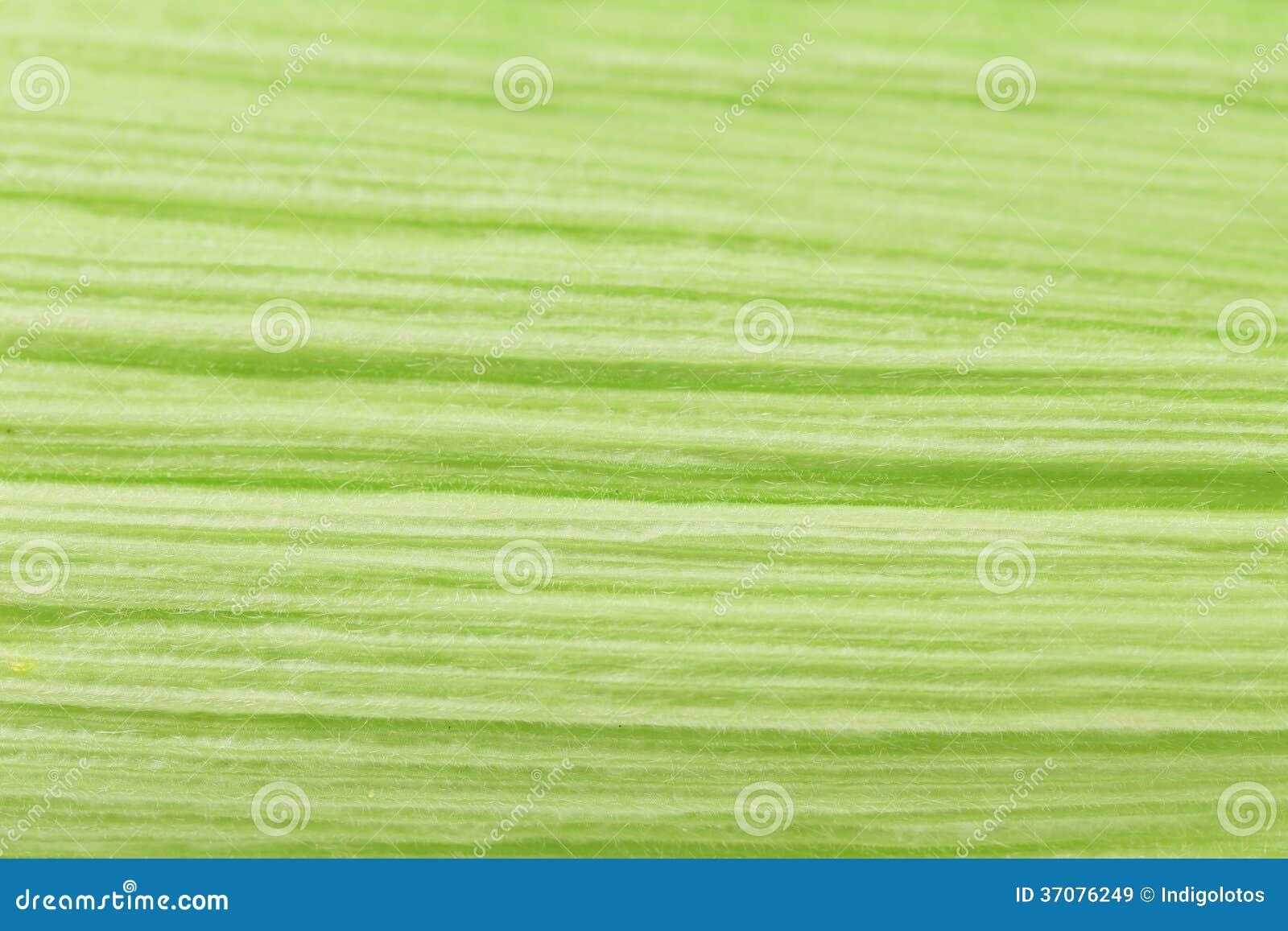Download Zamyka Up Kukurydzana Liść Tekstura. Obraz Stock - Obraz złożonej z tło, zakończenie: 37076249