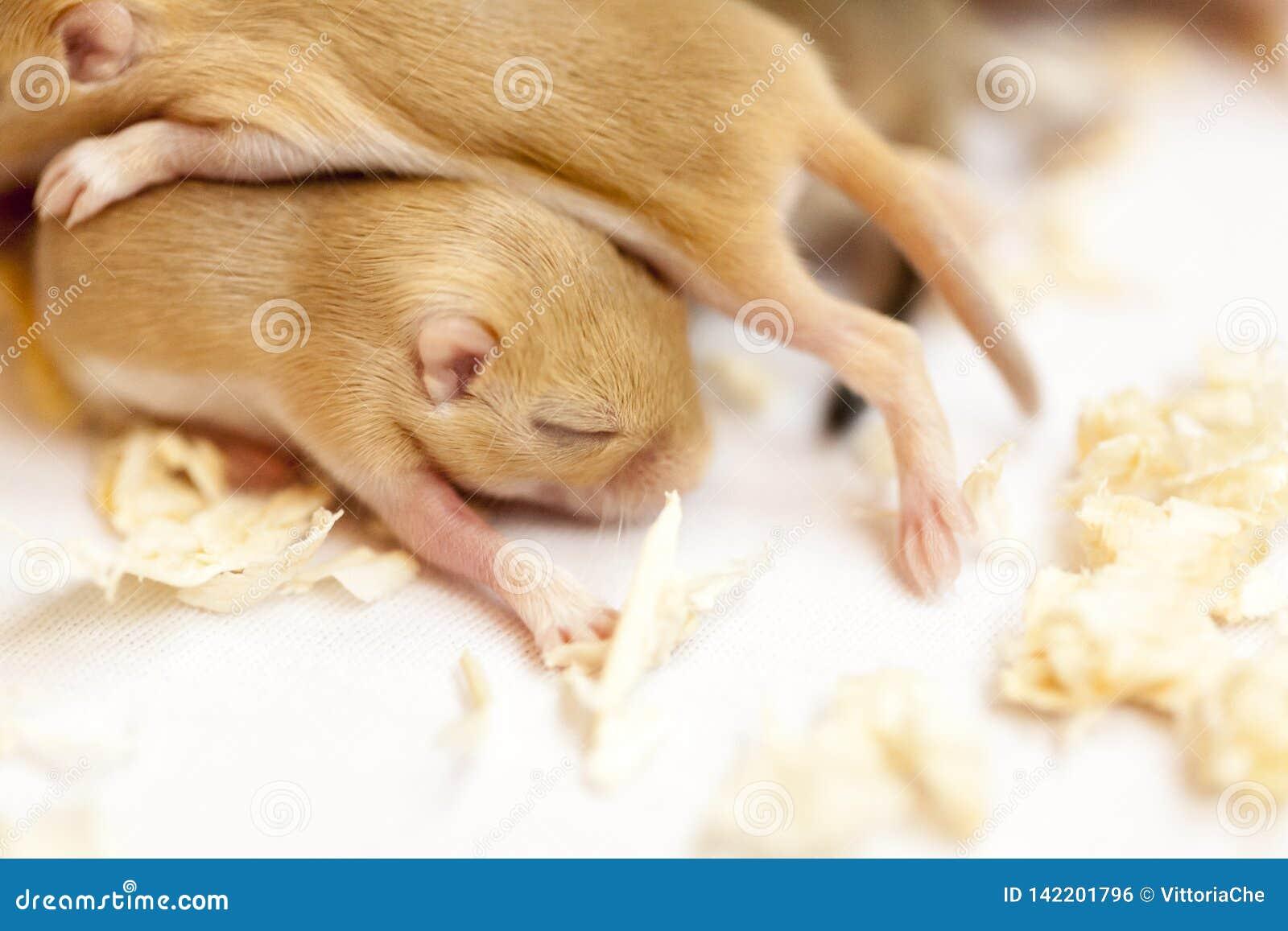 Zamyka w górę wizerunku mały śliczny myszy dzieci spać skupiam się wpólnie
